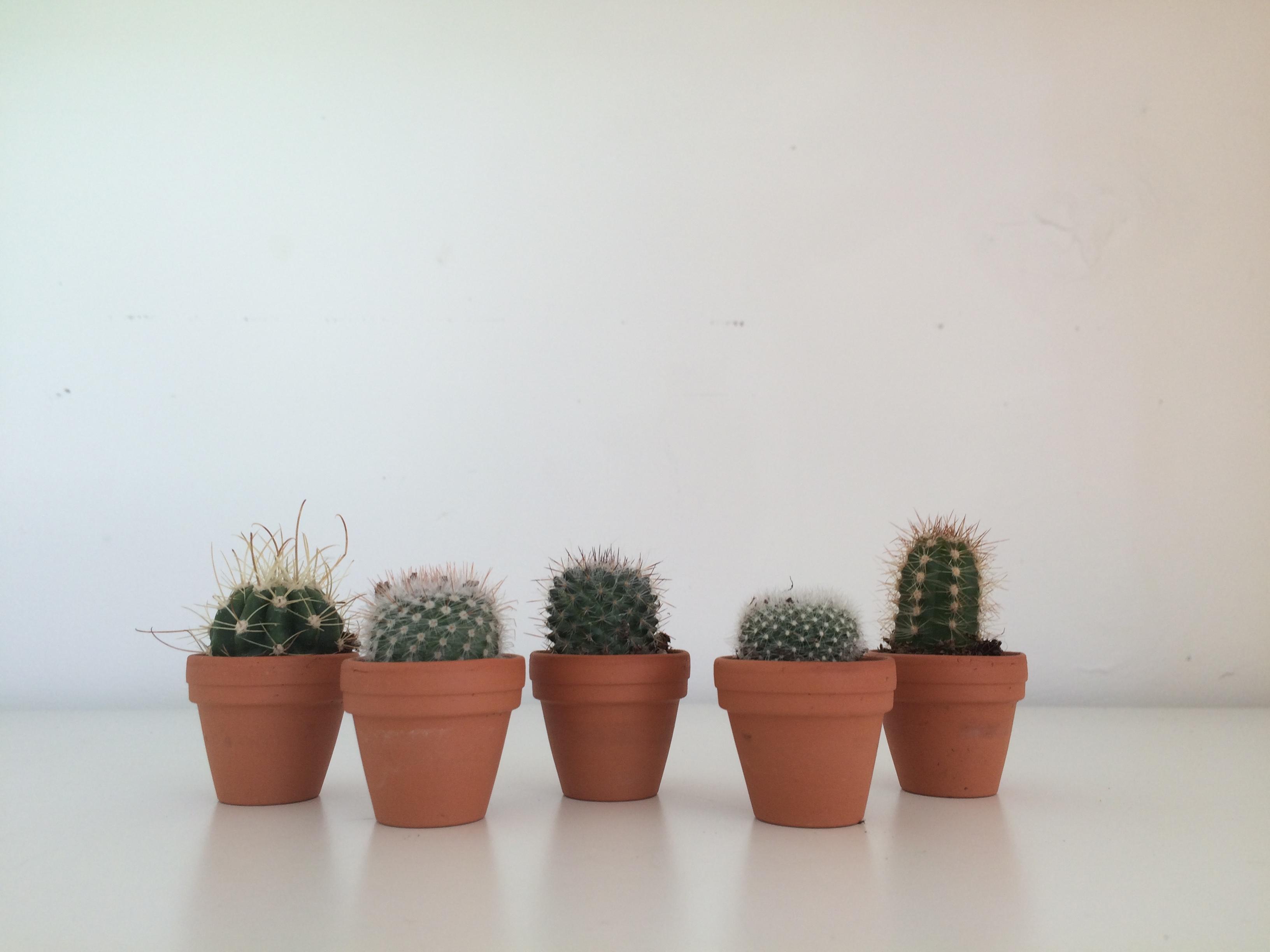 5 Mini Cacti Mix | The Glass Gardener