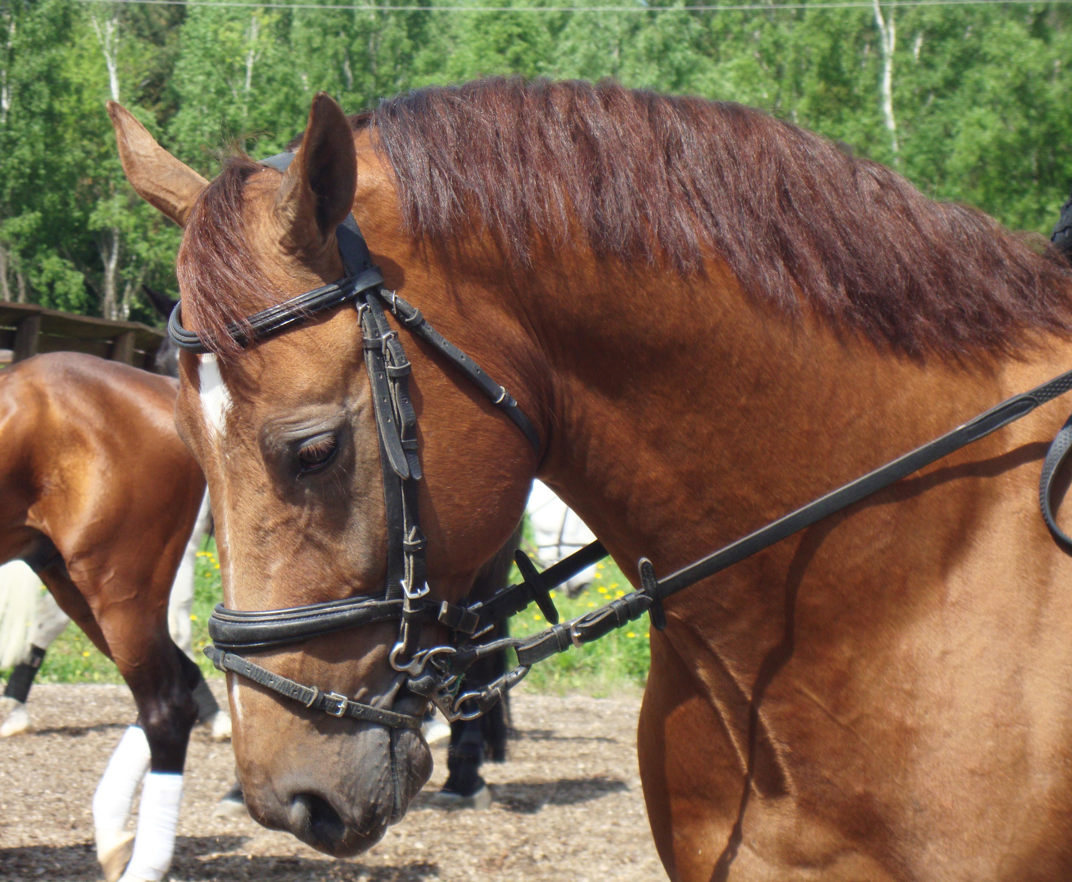 Horse, Animal, Head, Portrait, HQ Photo