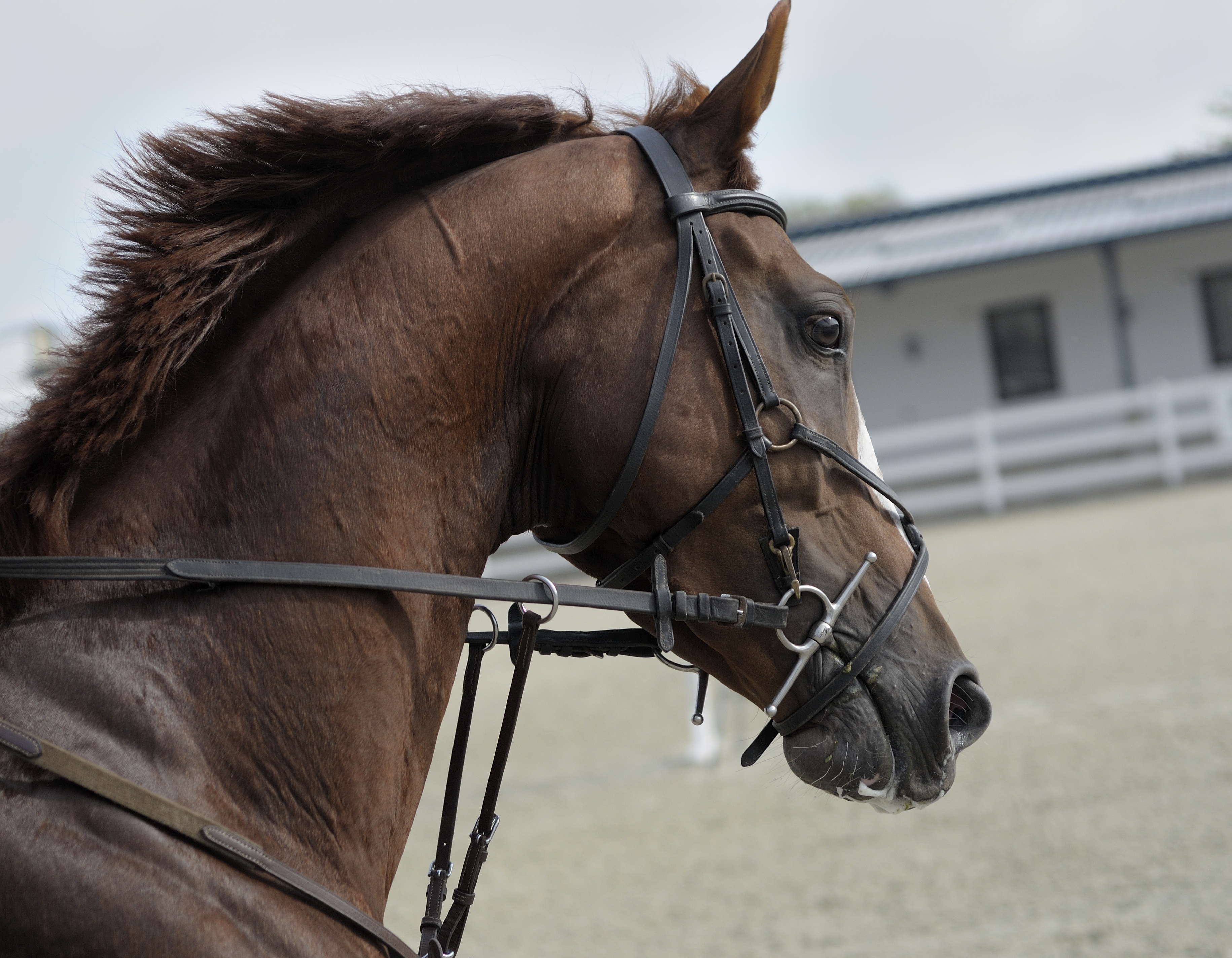 Horse at the Stable, Animal, Brown, Fast, Horse, HQ Photo