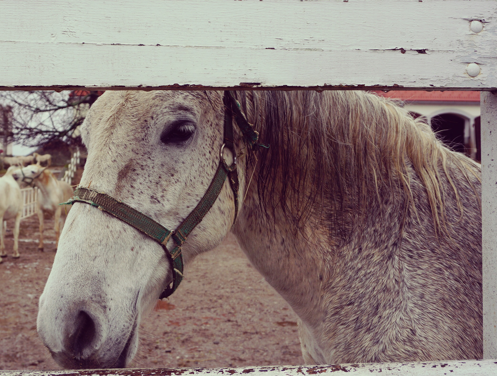 Horse at the stable photo