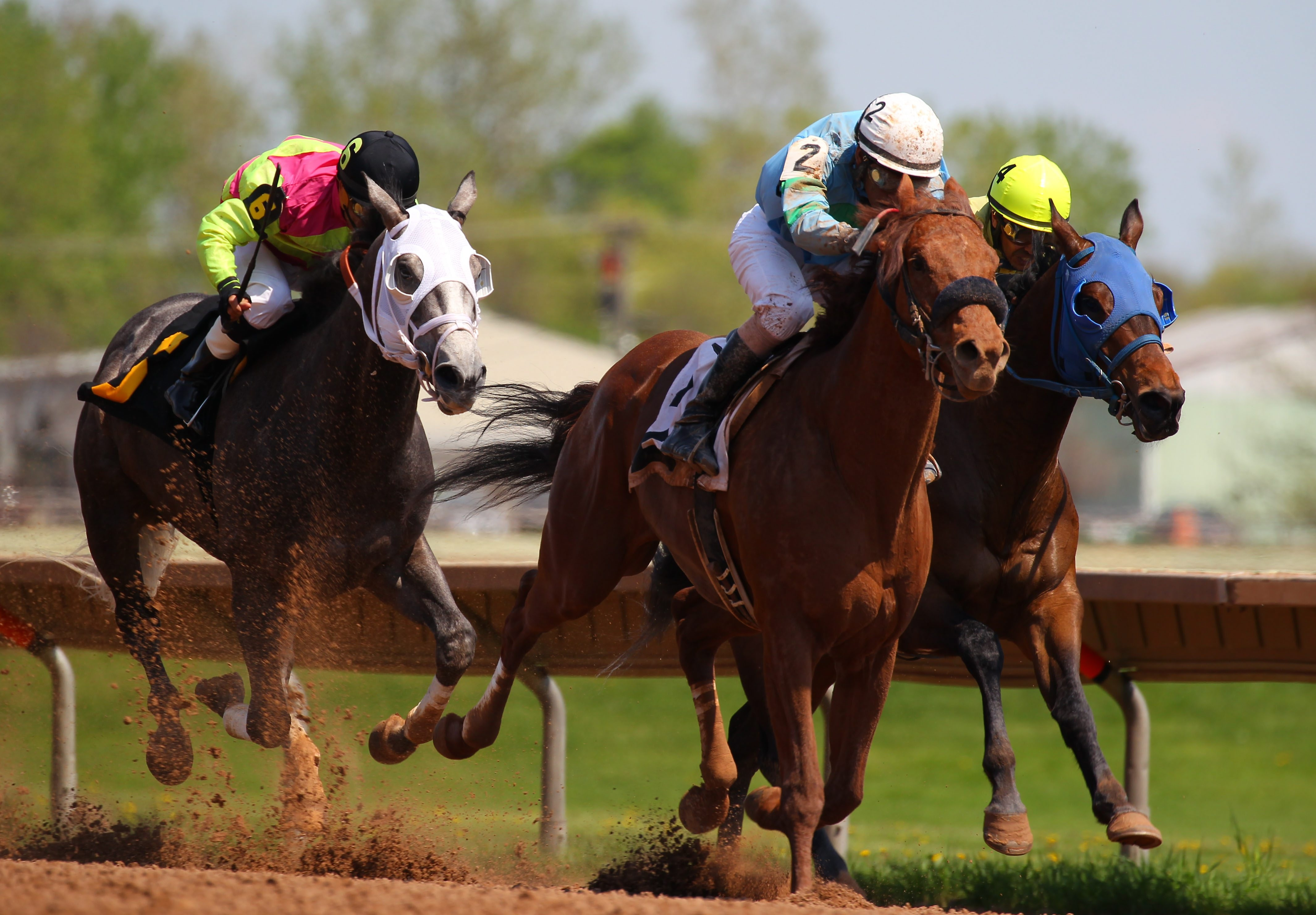 Fewer racehorses dying at New York tracks but state equine official ...