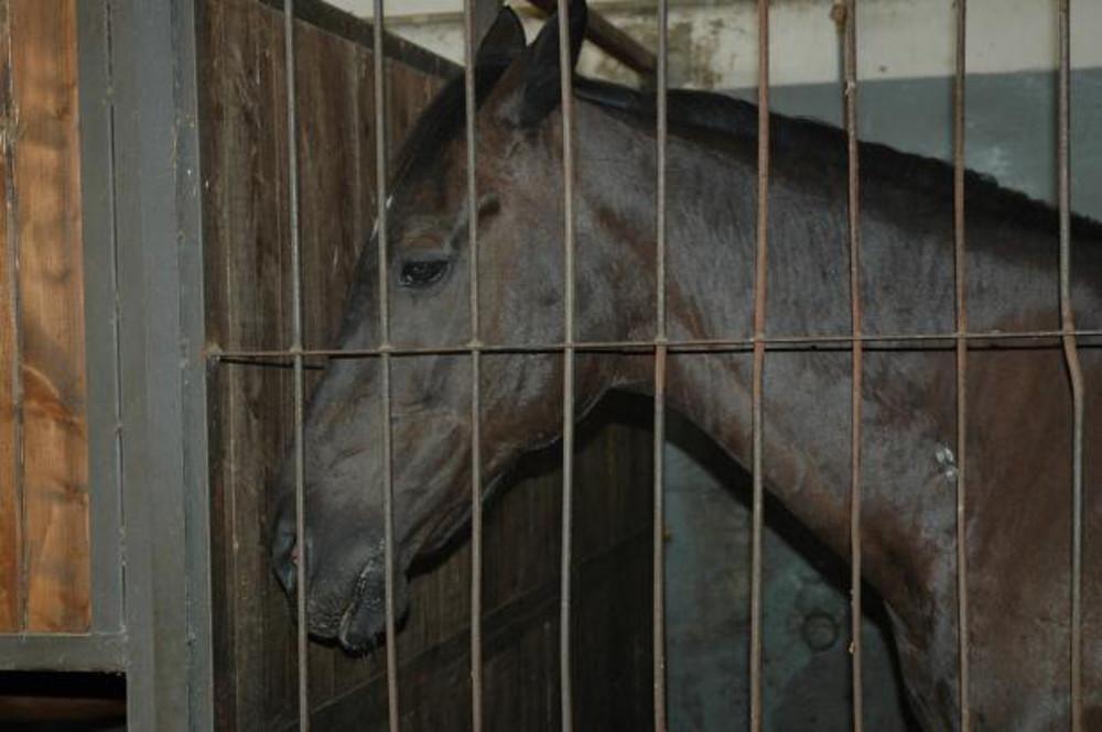 Horse behind bars, Animal, Bars, Cage, Caged, HQ Photo