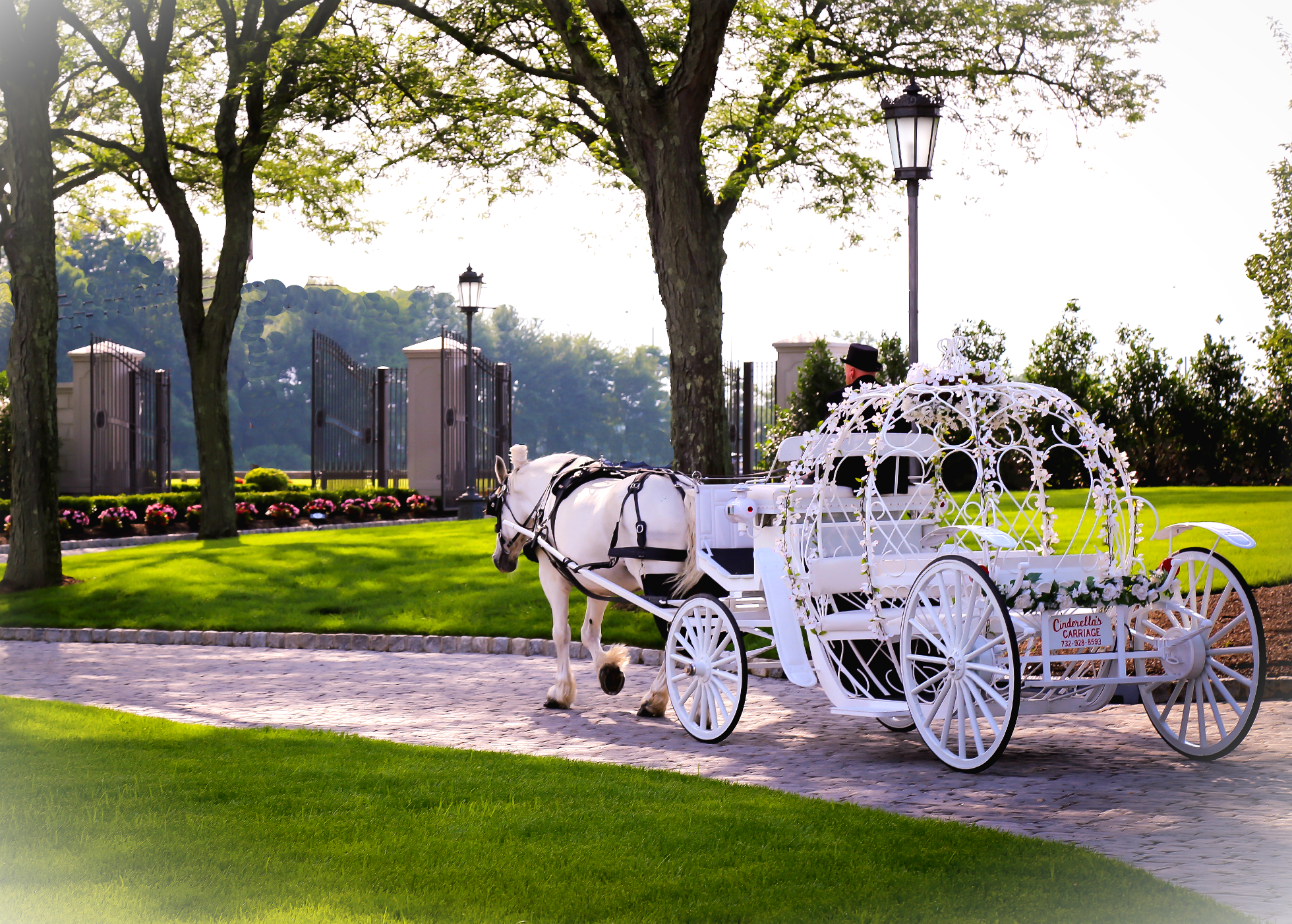 Dream Horse Carriage Ride and Rental Company - Home of the ...