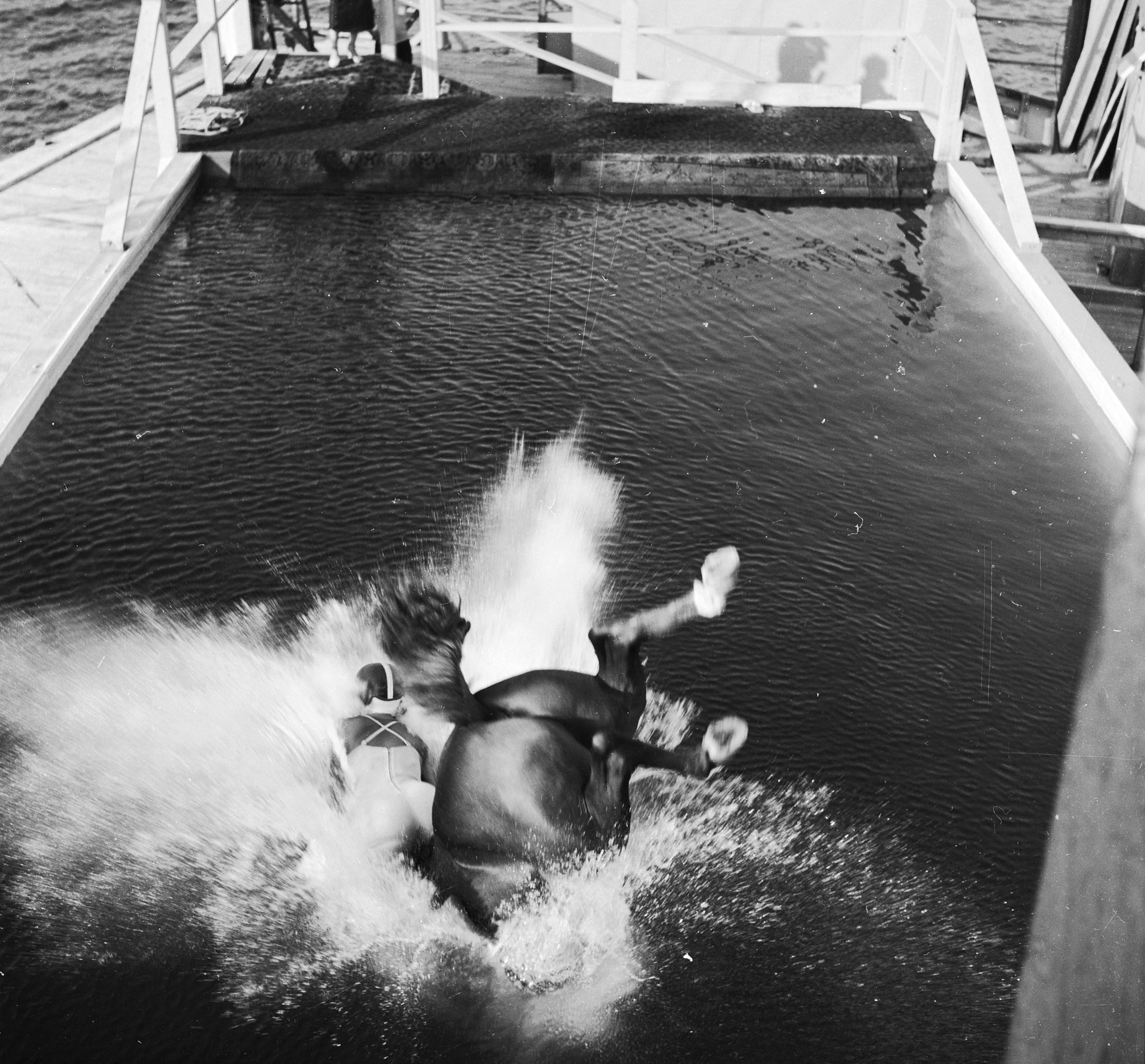 Atlantic City's Diving Horse Return Scrapped