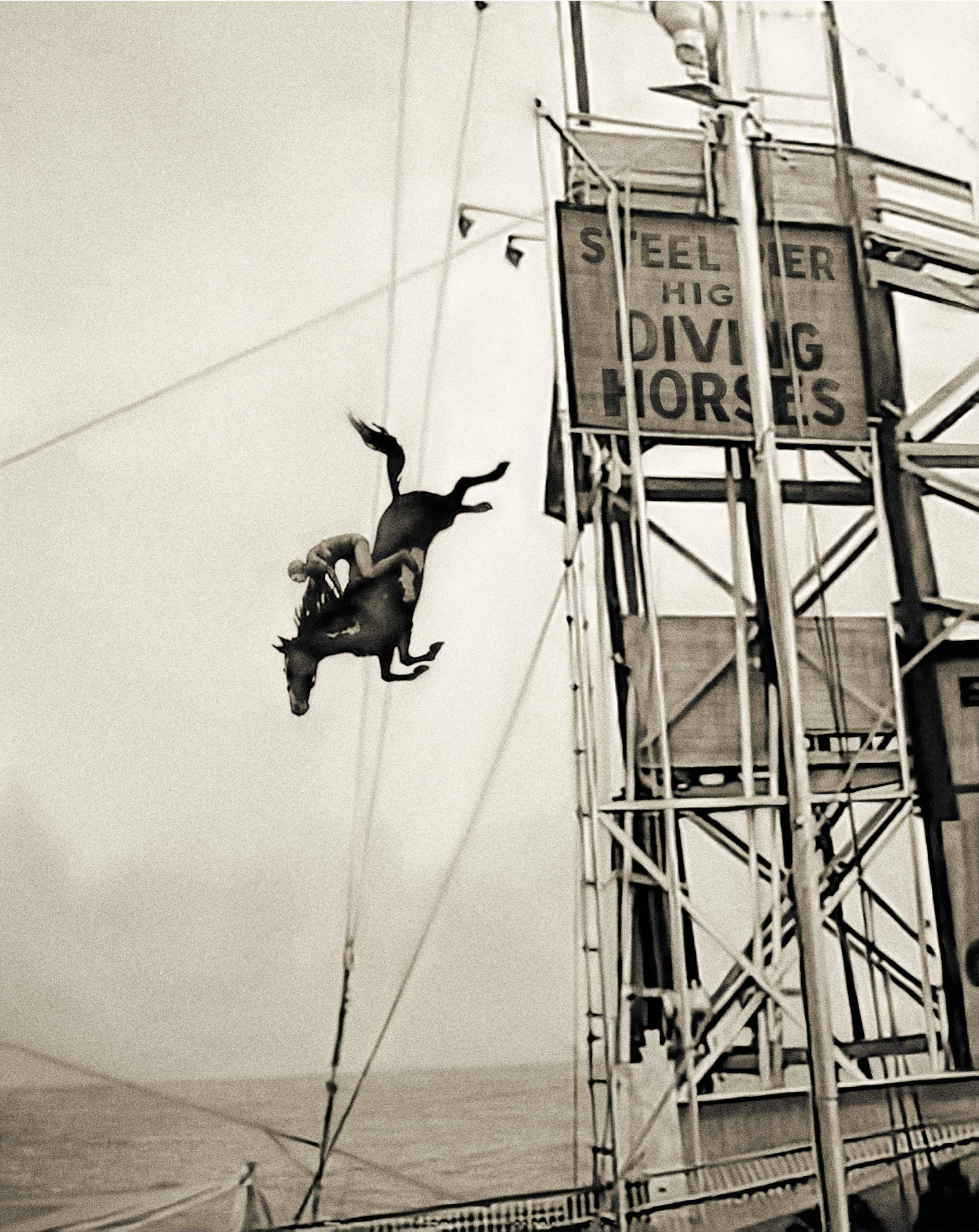 Diving horses vintage photo horse print horse art photography