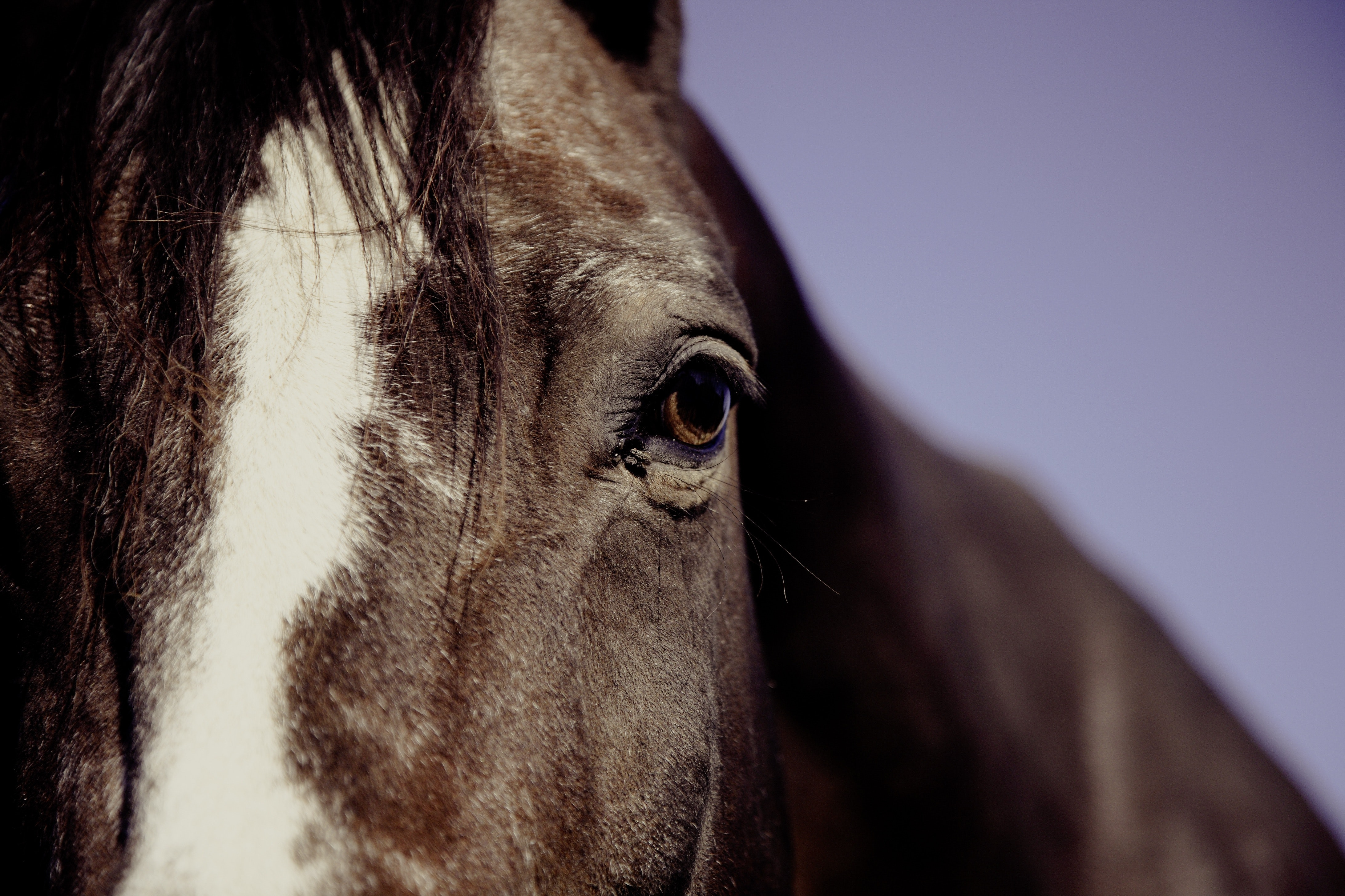 Horse face in focus phography photo
