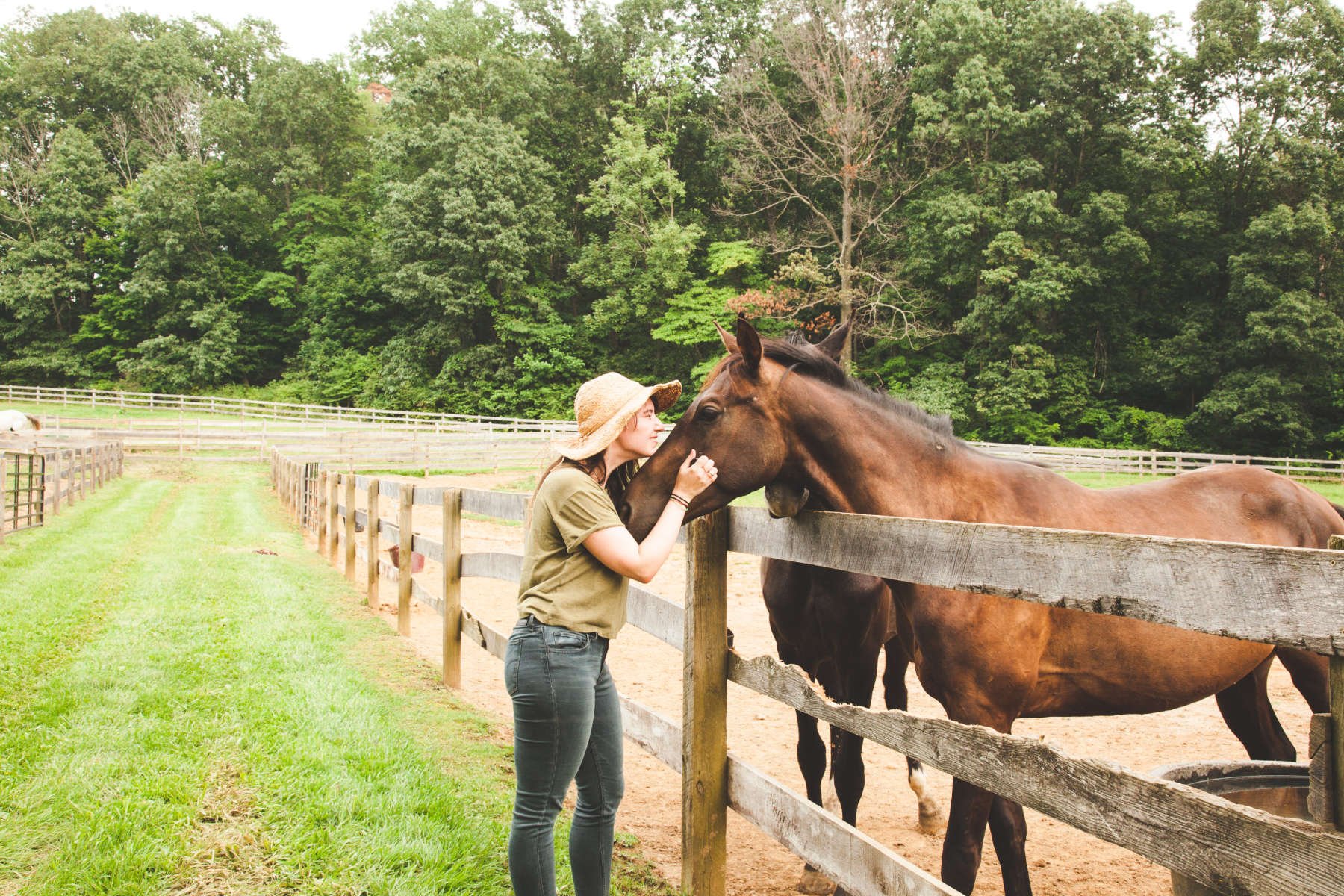Horse farm photo