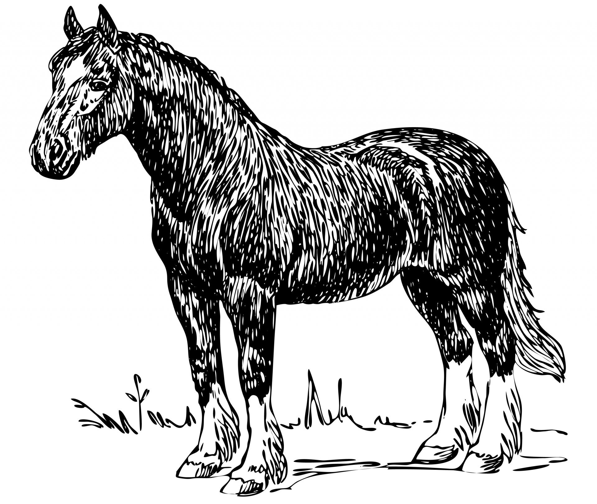Horse Illustration Clipart Free Stock Photo - Public Domain Pictures