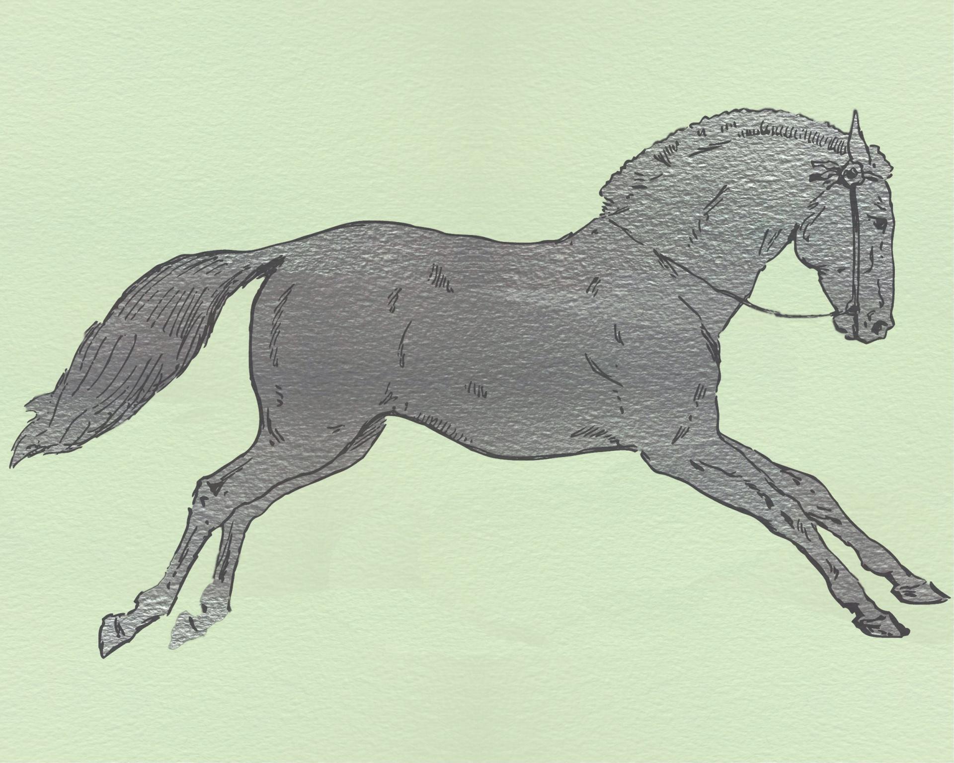 Horse Illustration Free Stock Photo - Public Domain Pictures