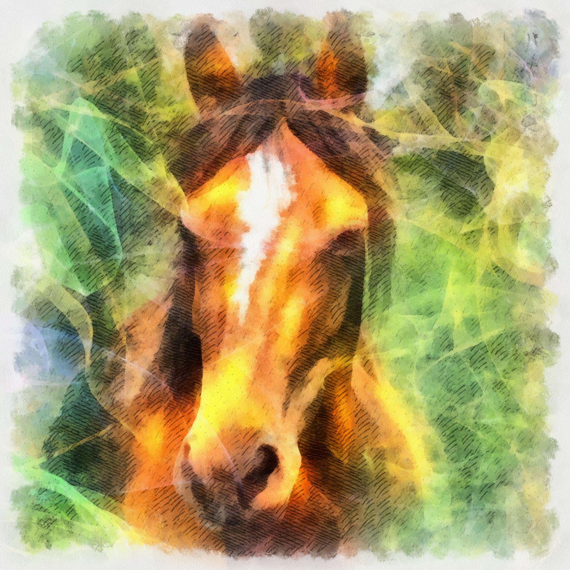 Horse Illustration, Animal, Art, Clipart, Graphic, HQ Photo