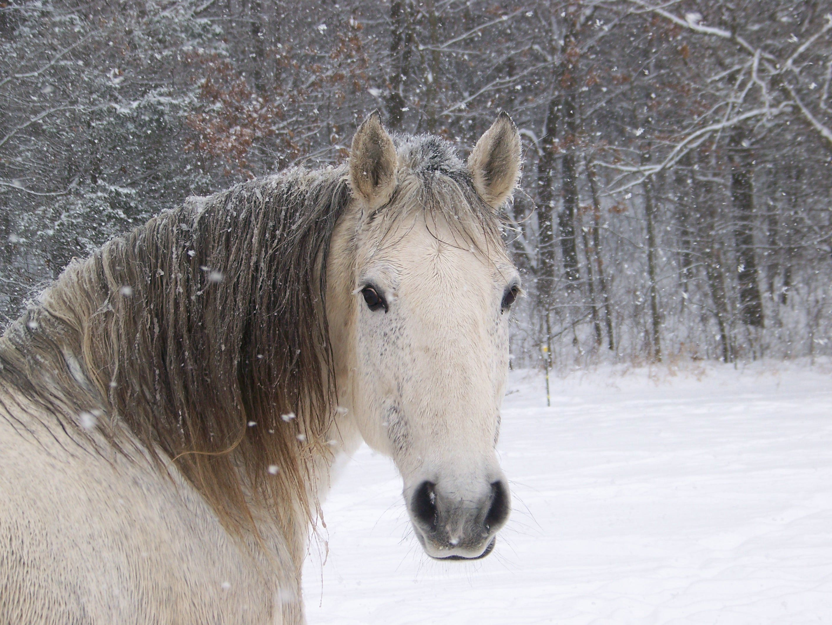 Horses are really cute animals and remained faithful with the human ...