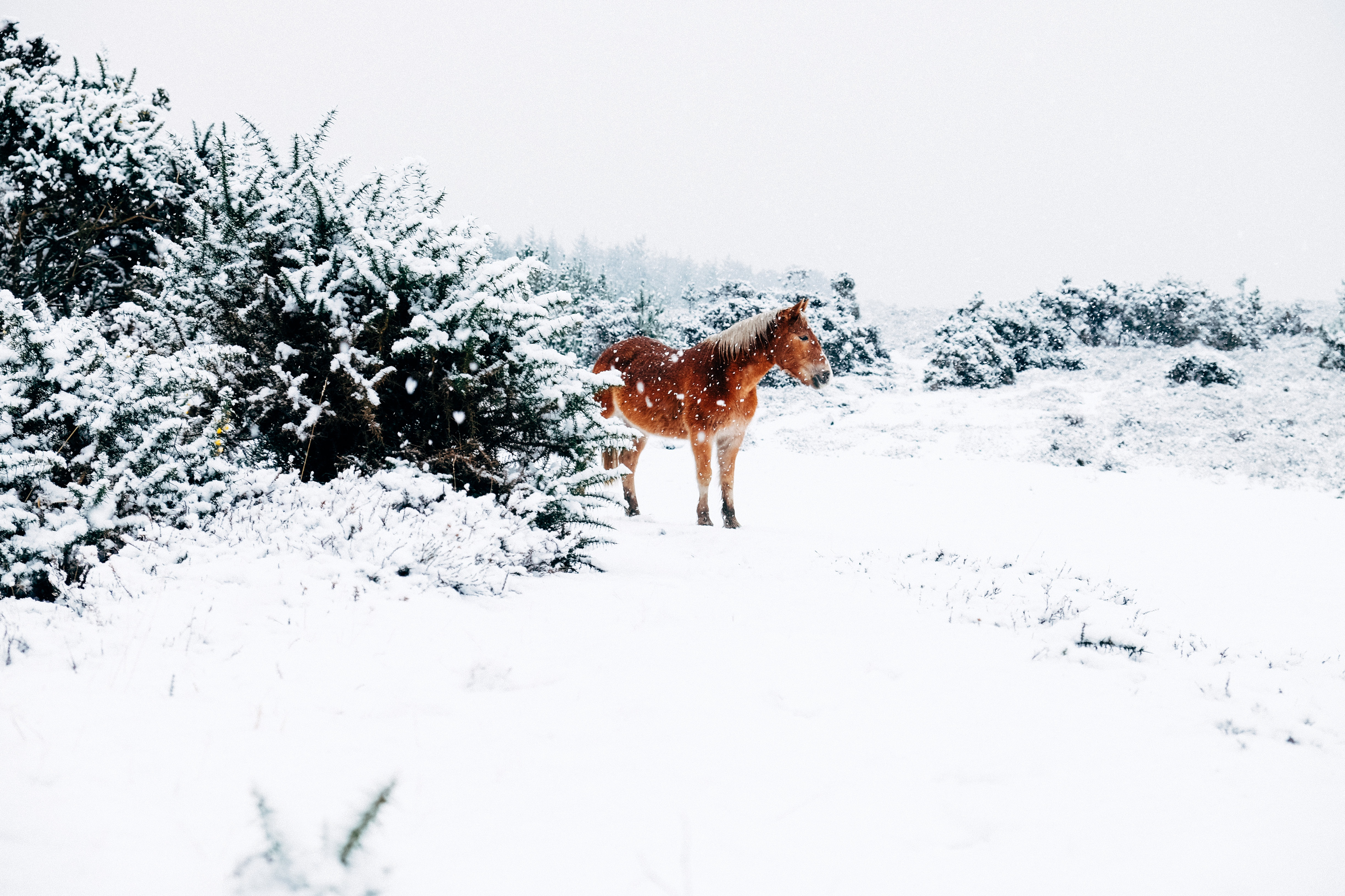 Horse In Snow, White, Winter, Snow, Ice, HQ Photo