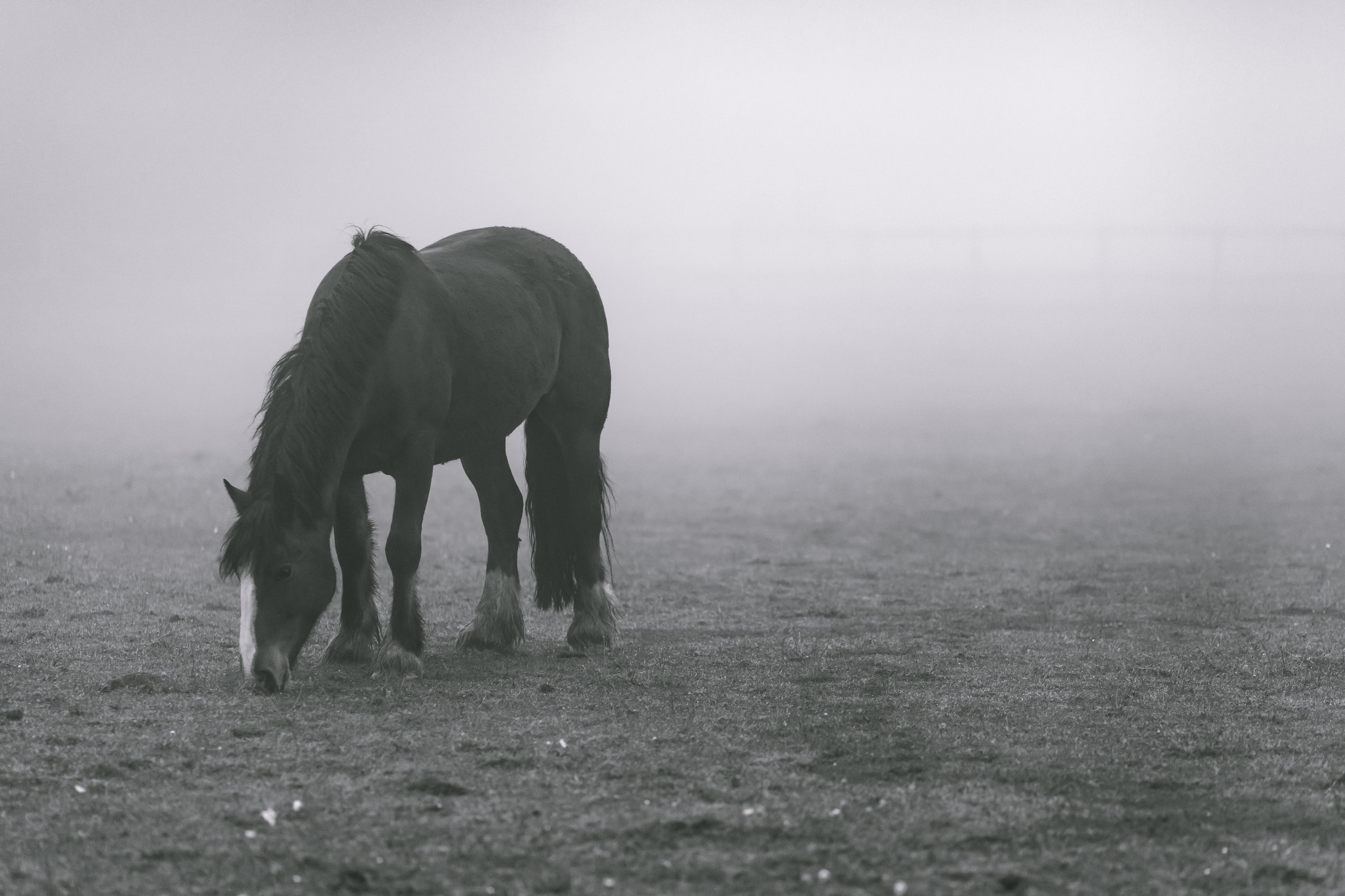 Horse in The Mist, Animals, Black & White, Blackandwhite, Field, HQ Photo