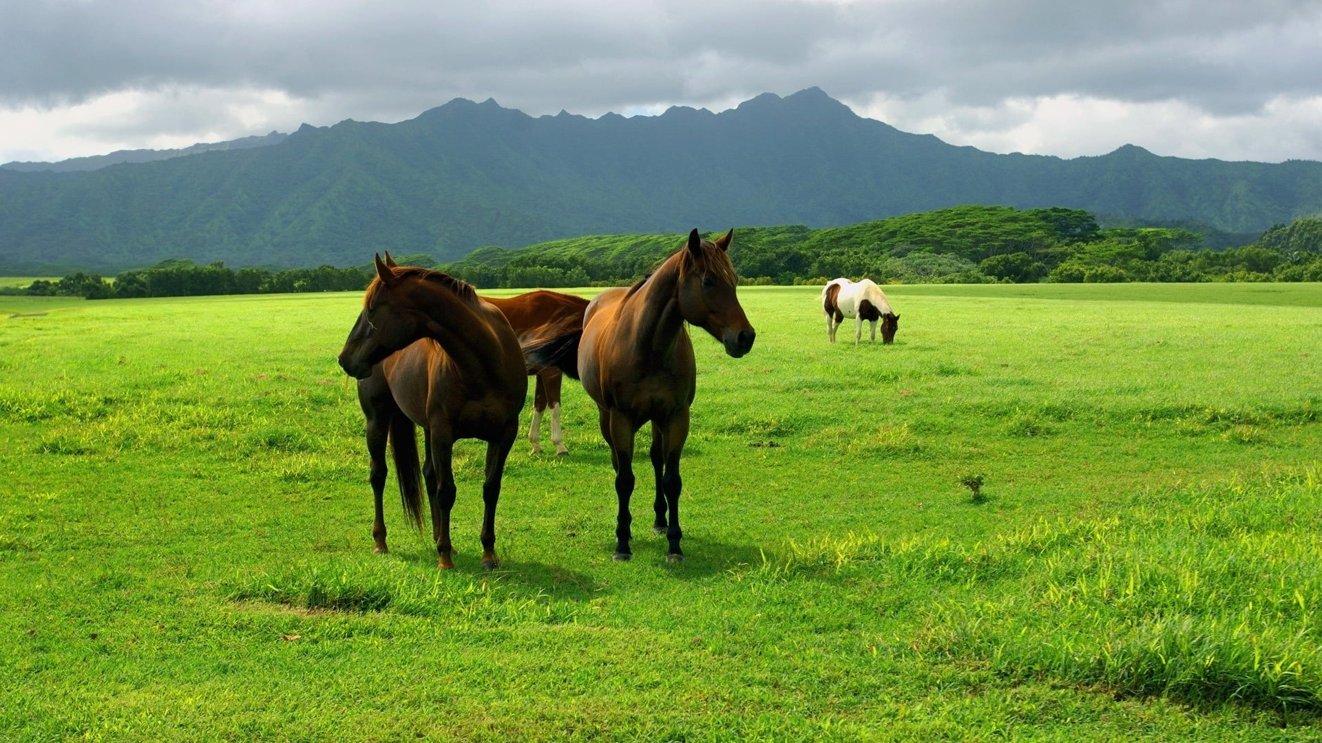 Two brown horse standing of grass field HD wallpaper | Wallpaper Flare