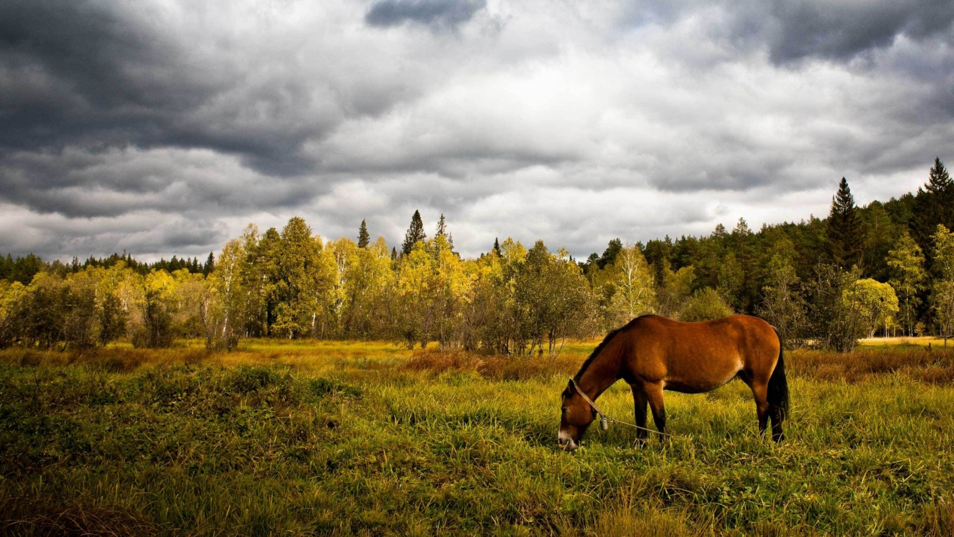 Download Wallpaper 1920x1080 horse, grass, field, meadow Full HD ...