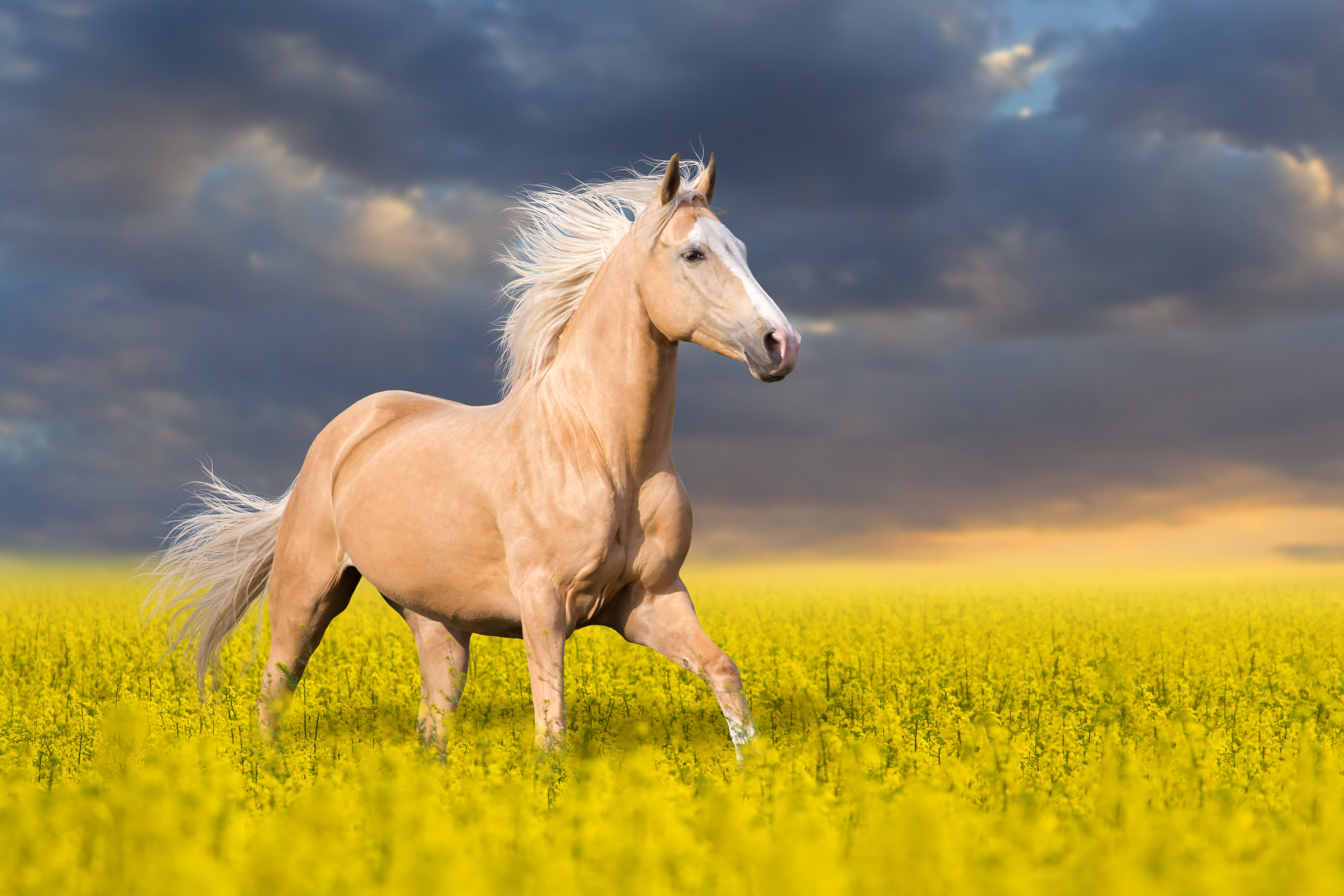 Dreaming in Gold: 12 Palomino Horses That Remind Us of Butterscotch
