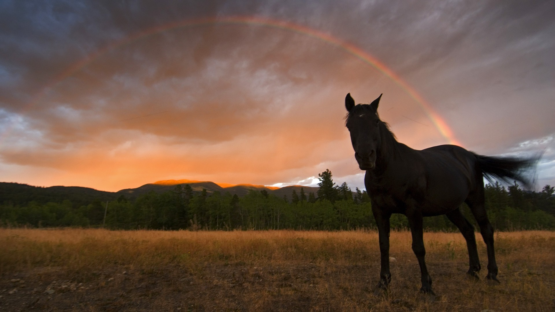 Other: Pink Nature Fields Horse Field Sky Rainbow Animals Trees ...