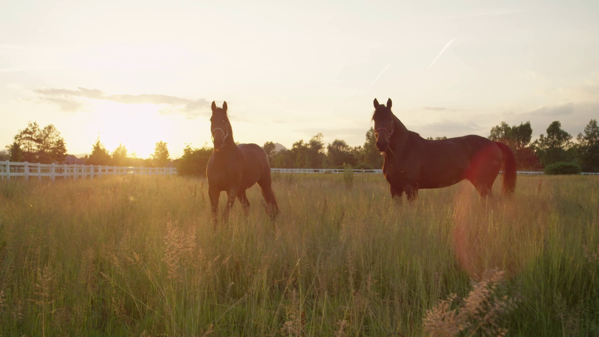 SLOW MOTION: Two beautiful dark brown horses running fast on vast ...