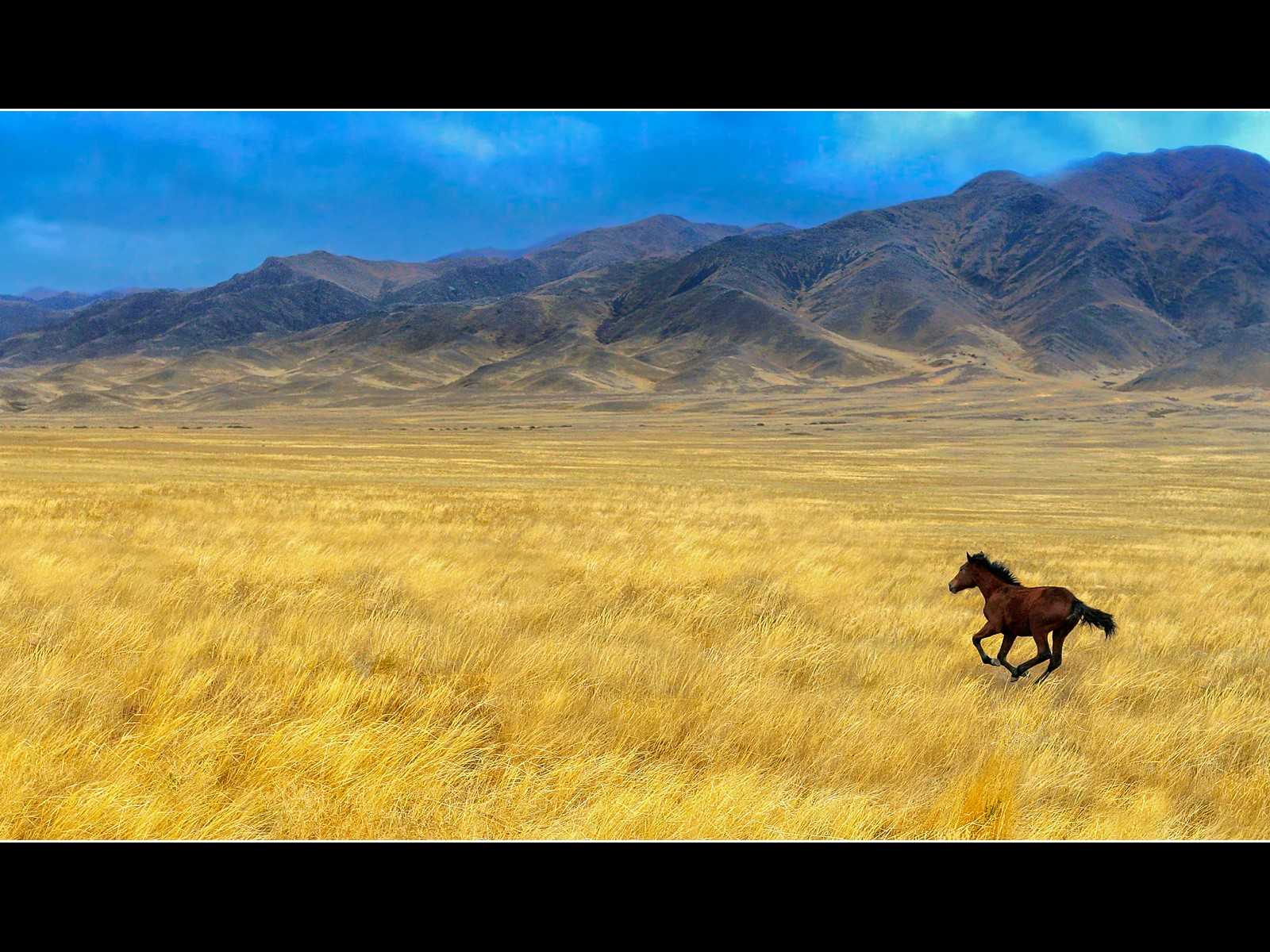 Field: Horse Field Images Fields Of Flowers HD 16:9 High Definition ...