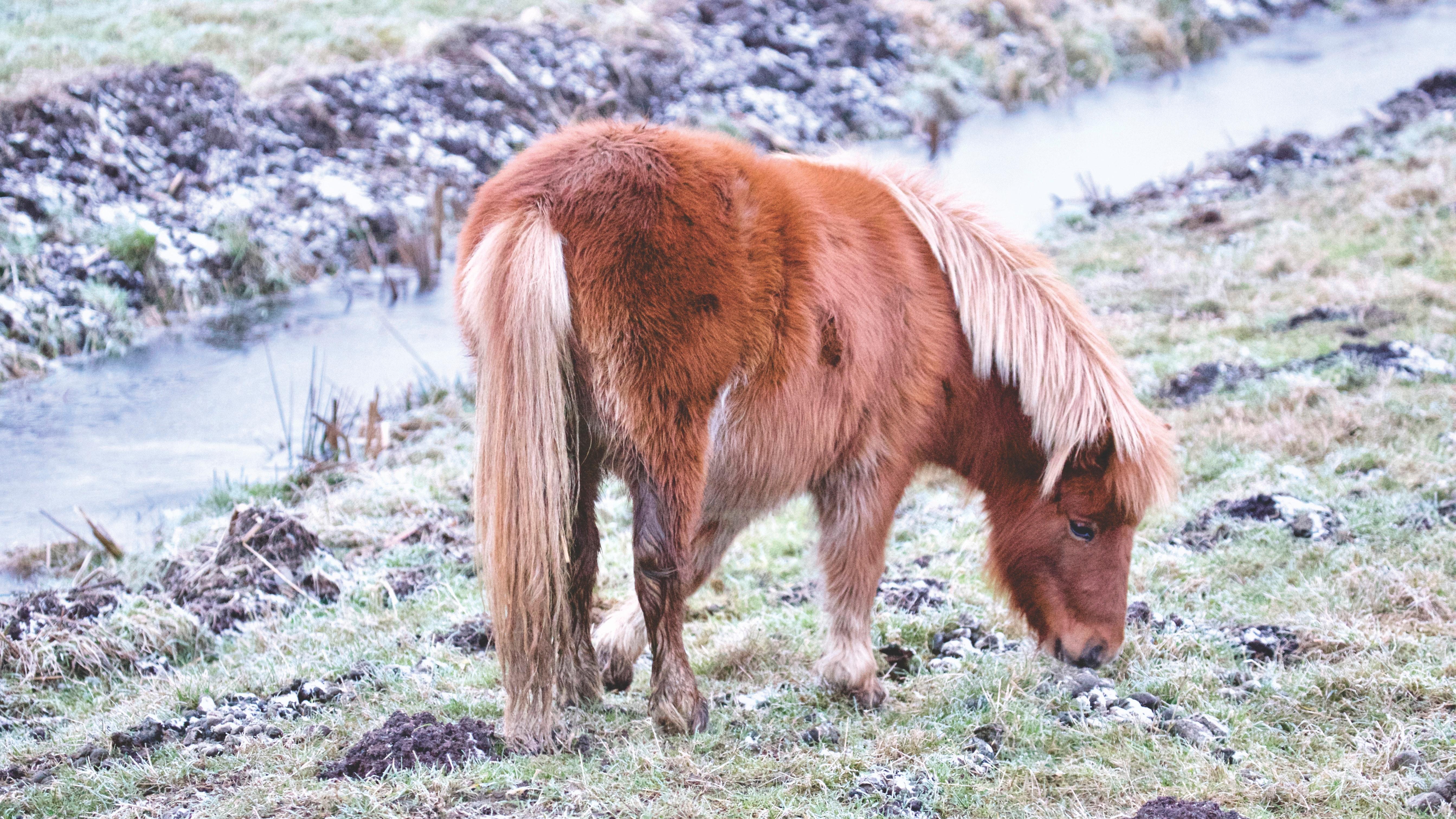 Horse on field photo