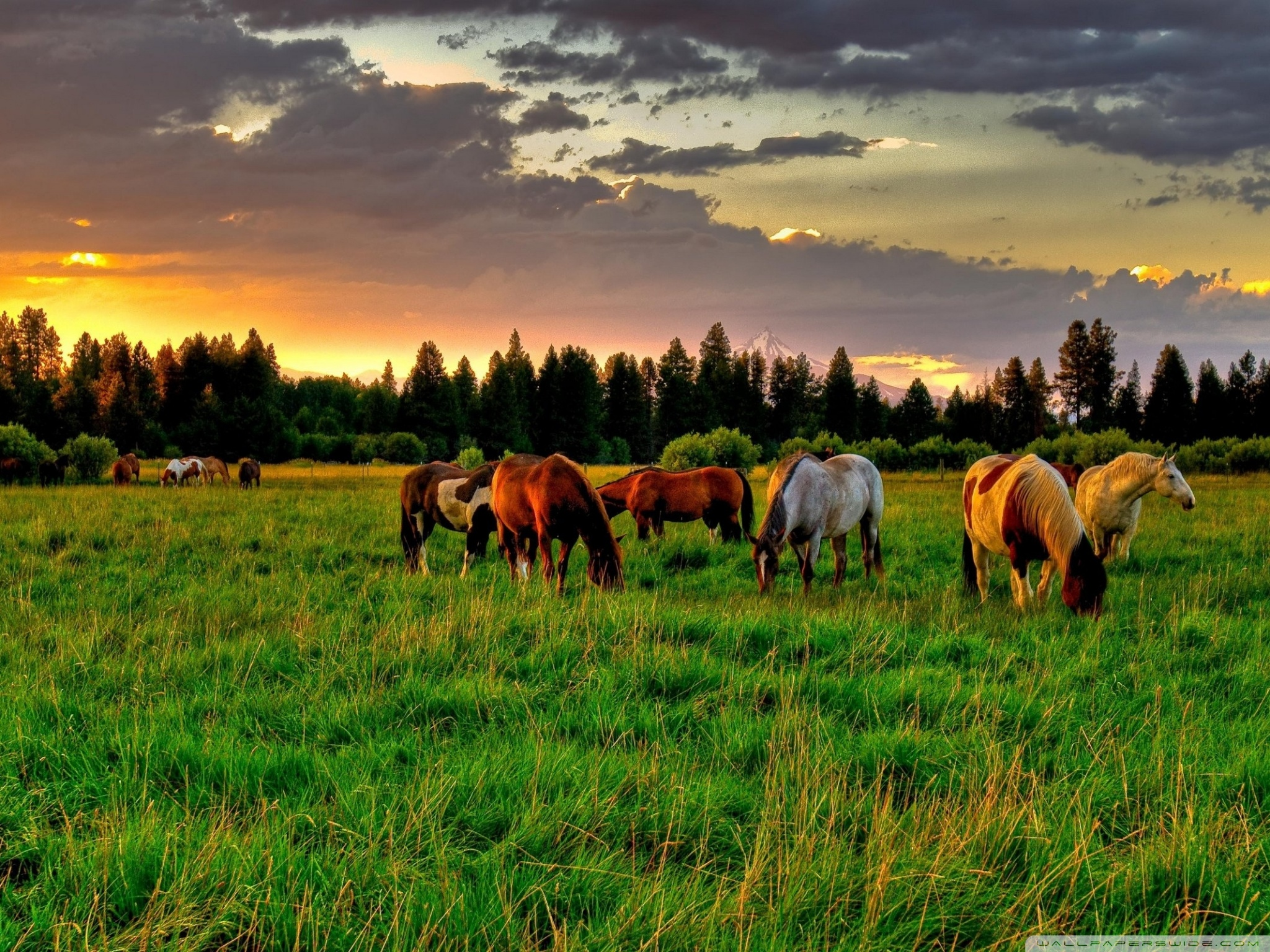 Horses Grazing In A Field ❤ 4K HD Desktop Wallpaper for 4K Ultra HD ...