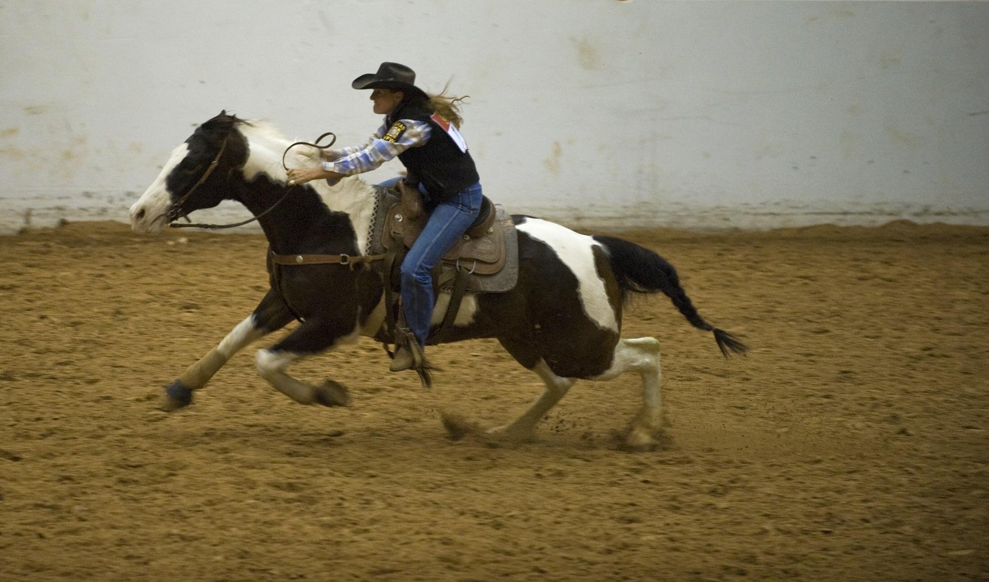 Free Photo Horse Rider Activity Animal Farm Free Download Jooinn