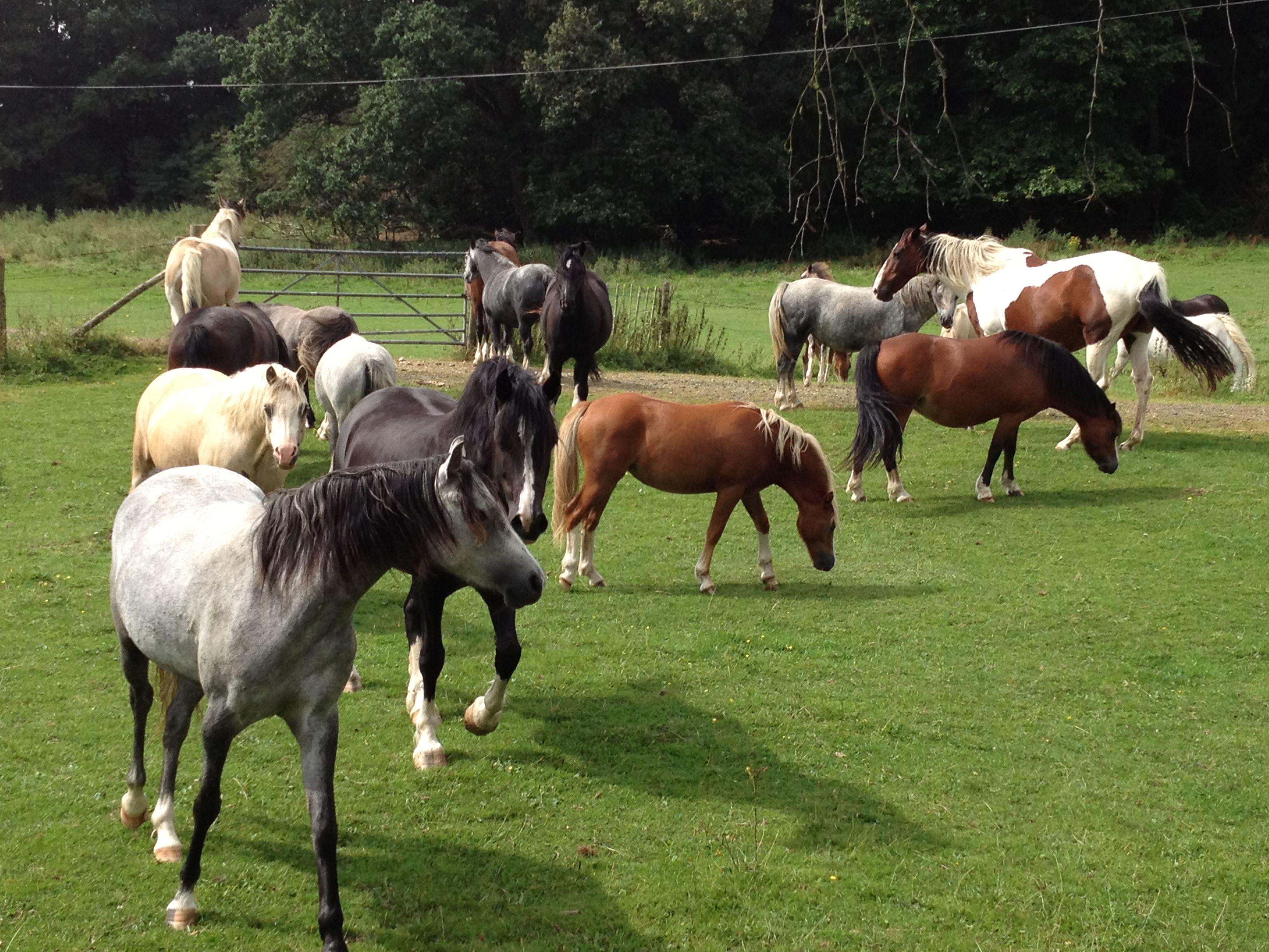 Herd of horses in Park Farm land in Gerrads Cross England | Out in ...