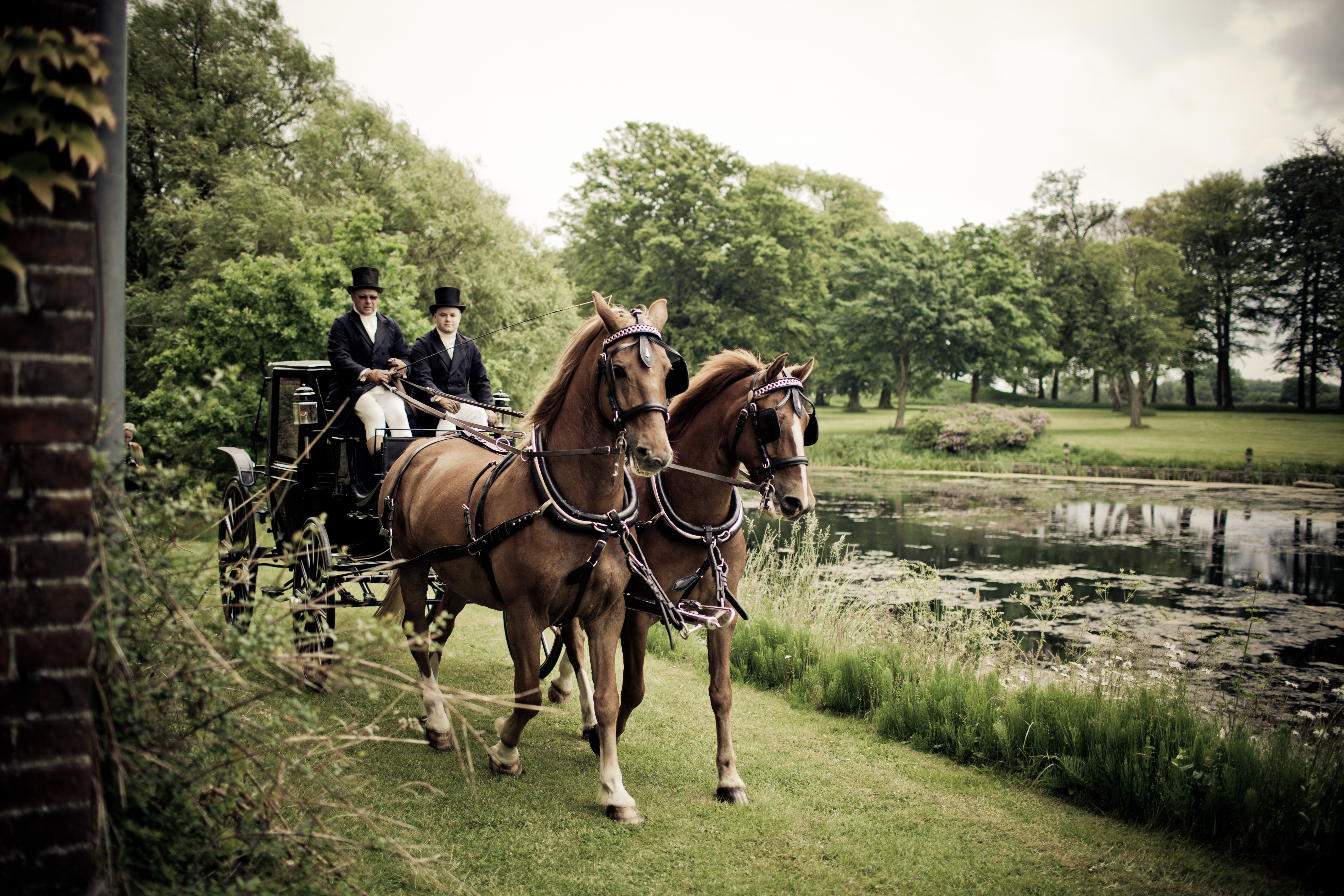 Horses in Park, Agriculture, Park, Wagon, Trees, HQ Photo