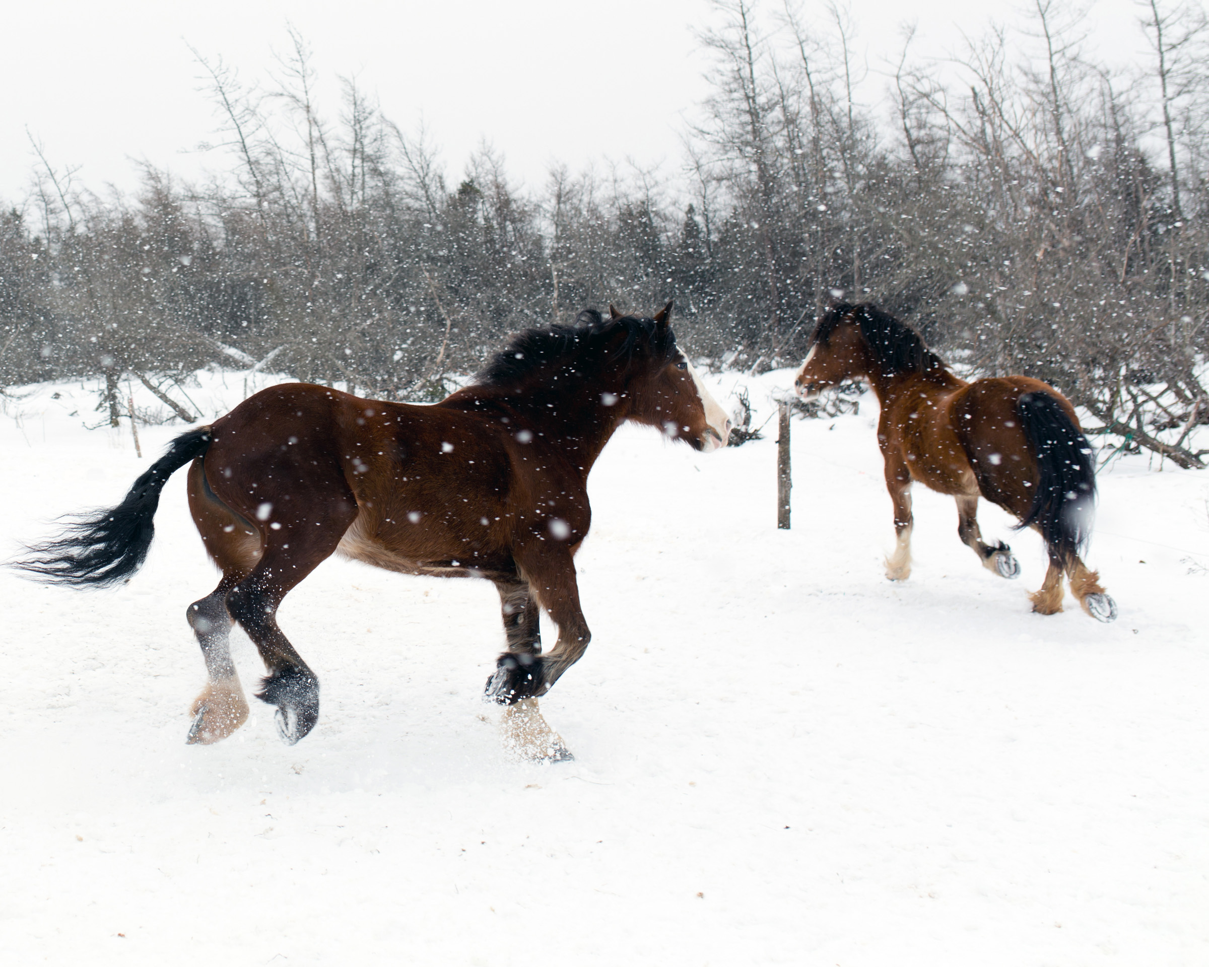 Horses in the snow photo