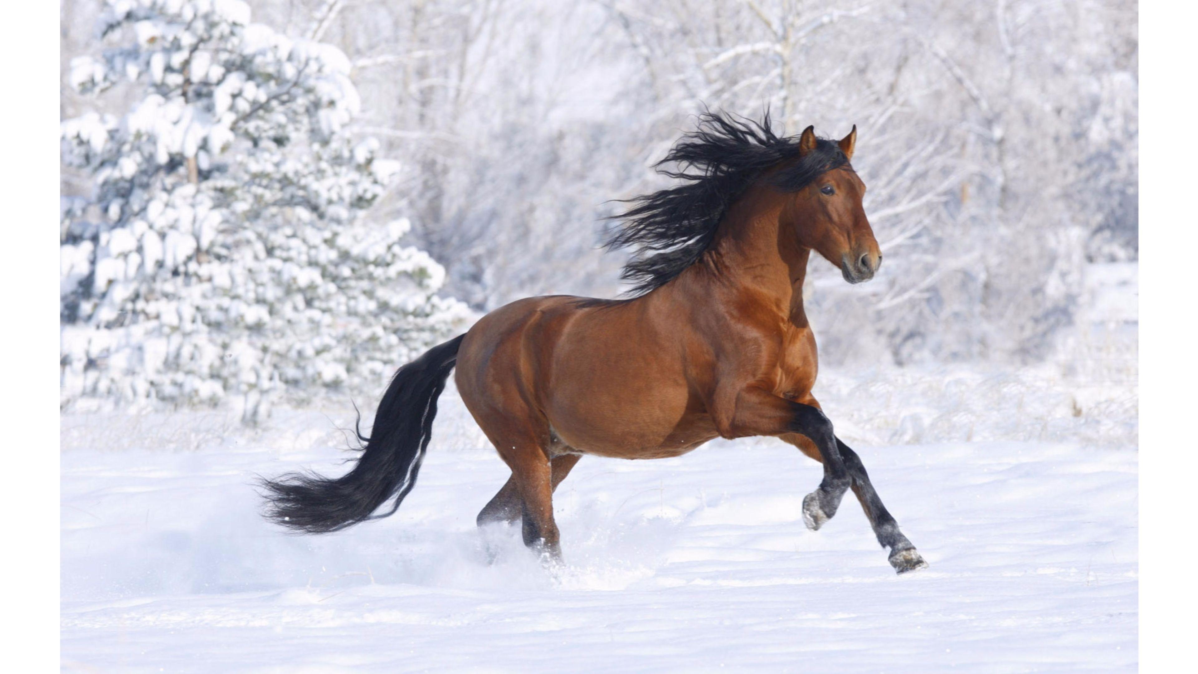 Snow Horses 4K Wallpaper   Free 4K Wallpaper