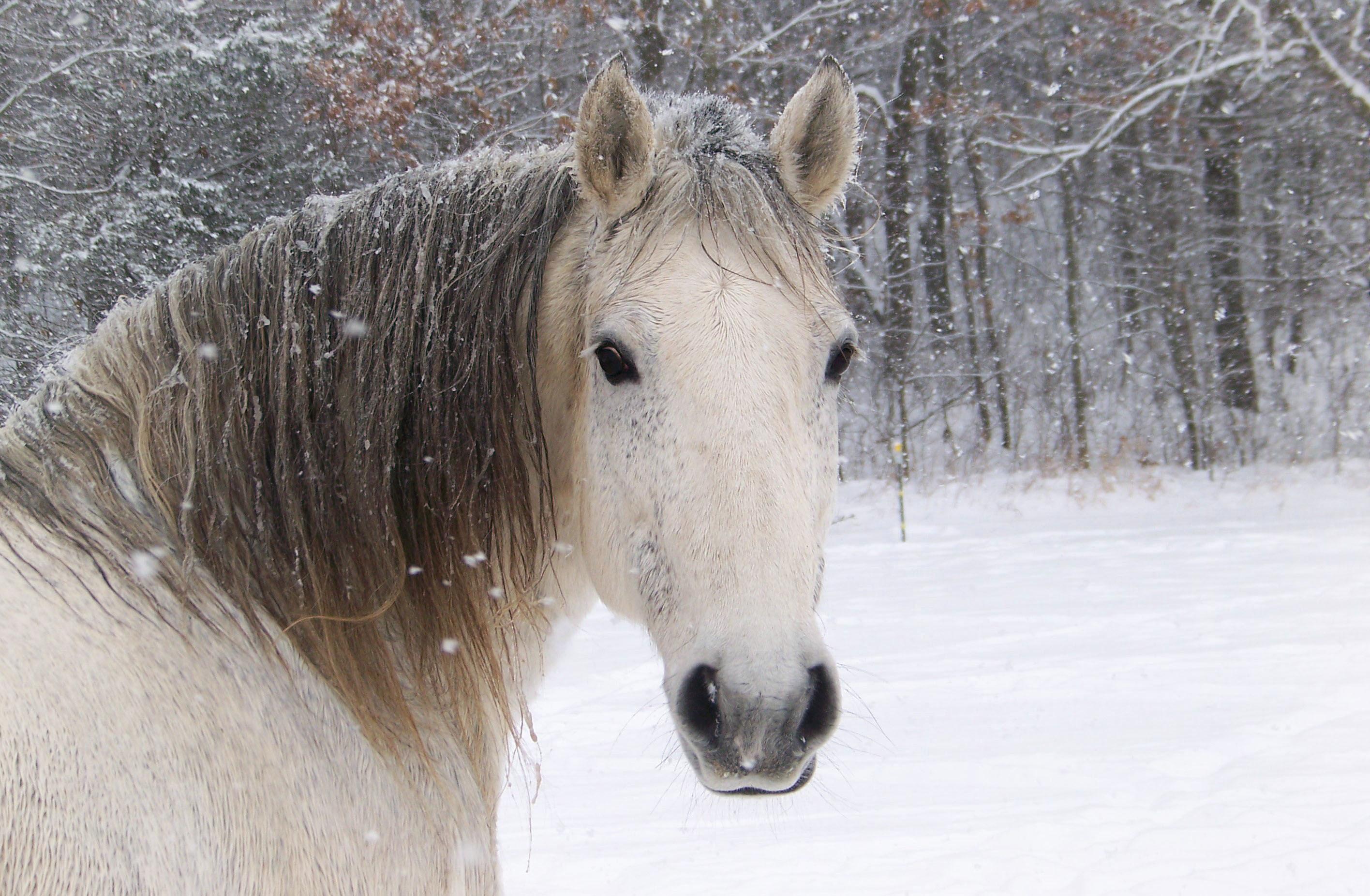 phantom horses