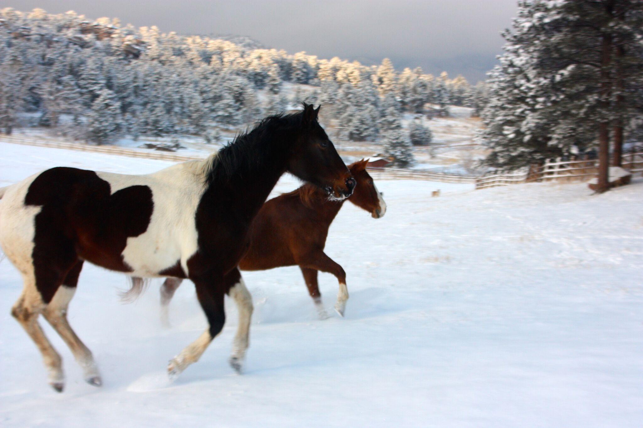 Why Horses?   Life Coach - Deborah Inanna