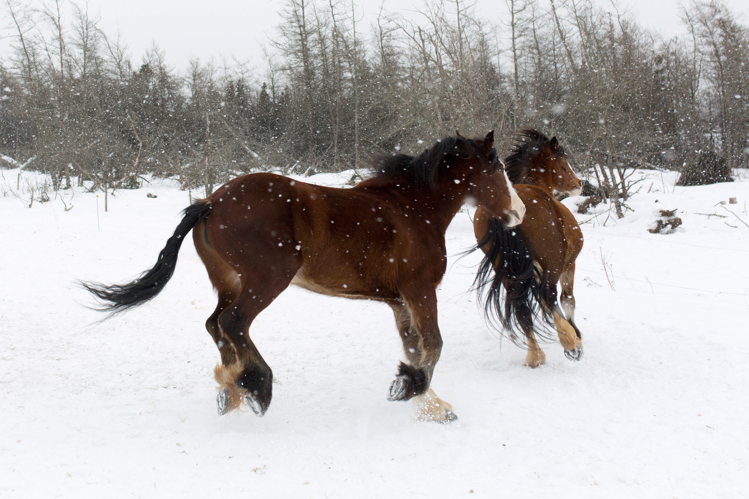 Horses in the snow, Speed, Nature, Orange, Power, HQ Photo