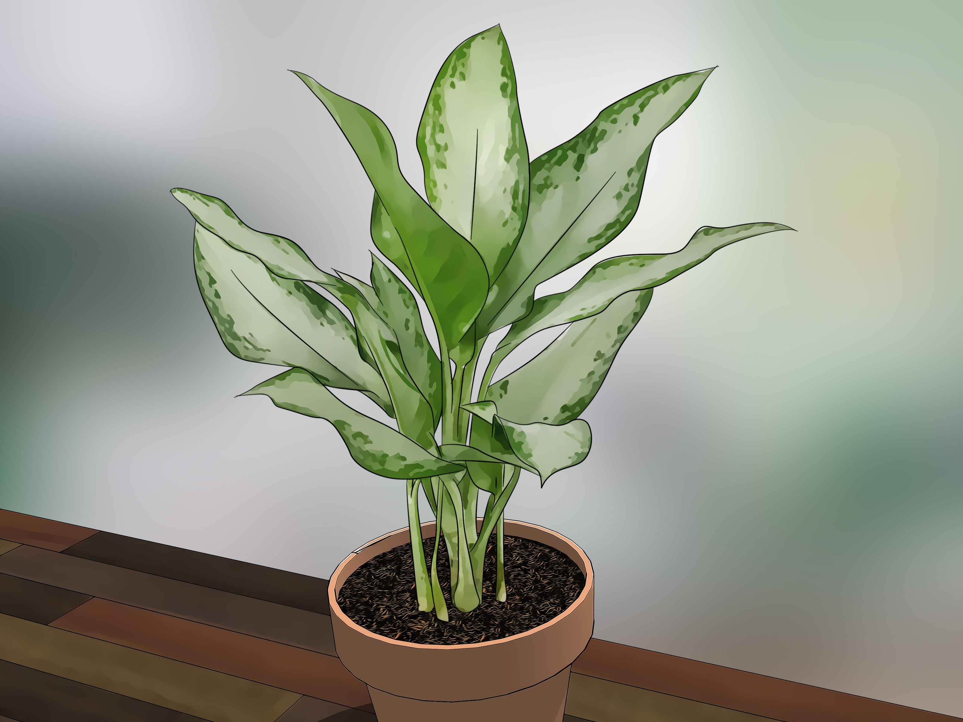 How to Care for Indoor Plants: 15 Steps (with Pictures) - wikiHow