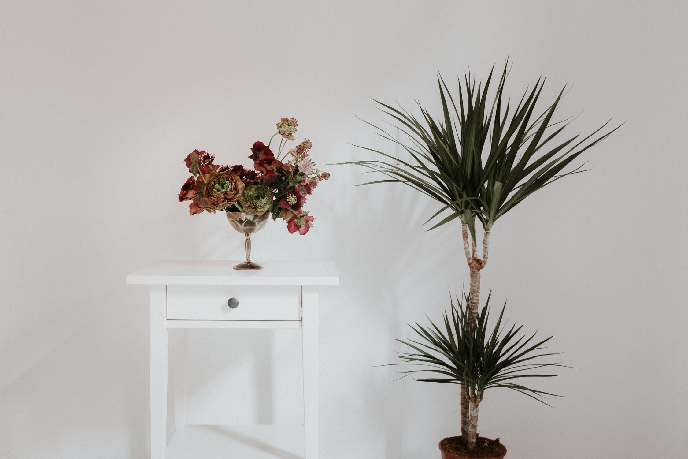 house plants, house plants