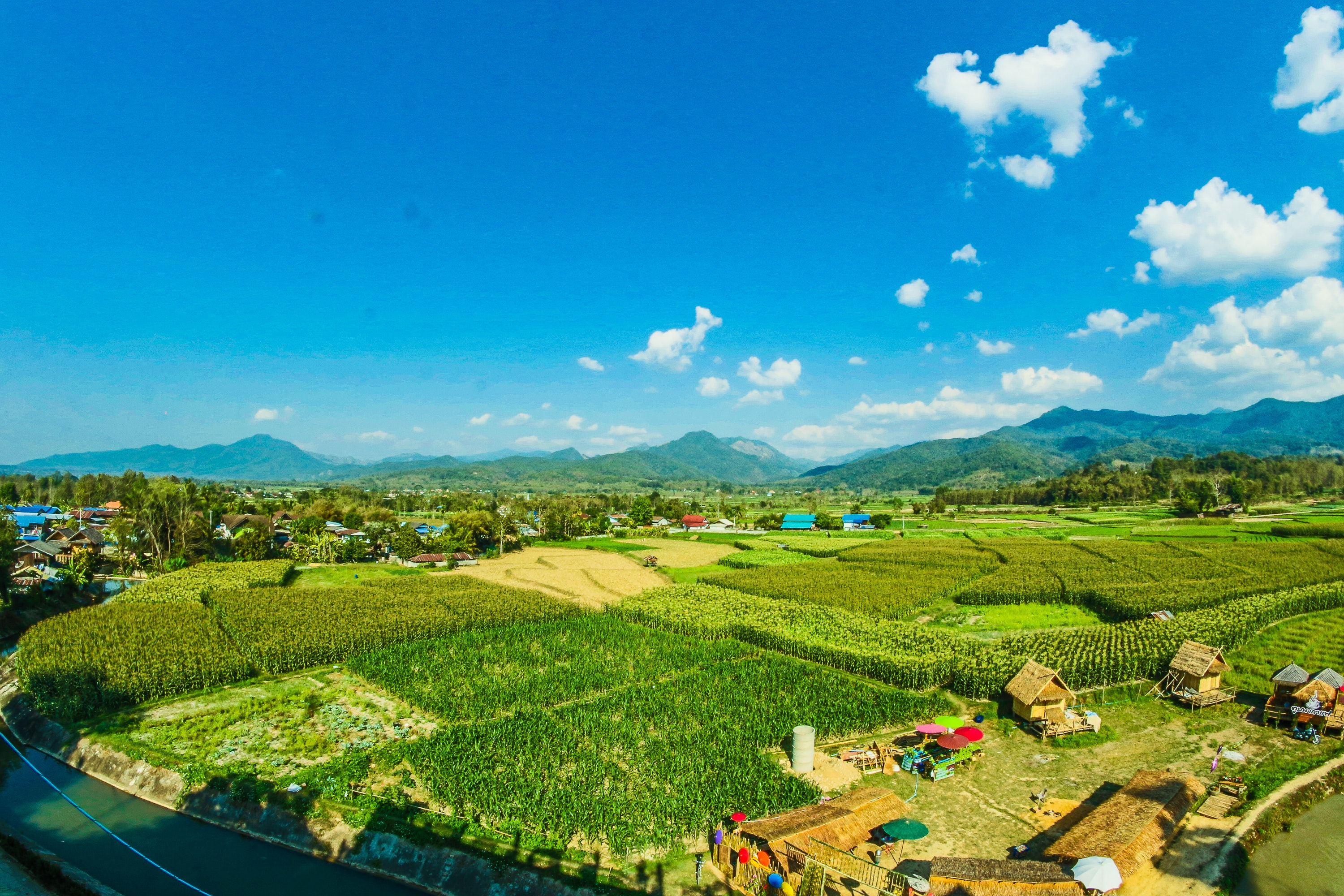 Houses near the rice wheat field under the clear blue skies photo
