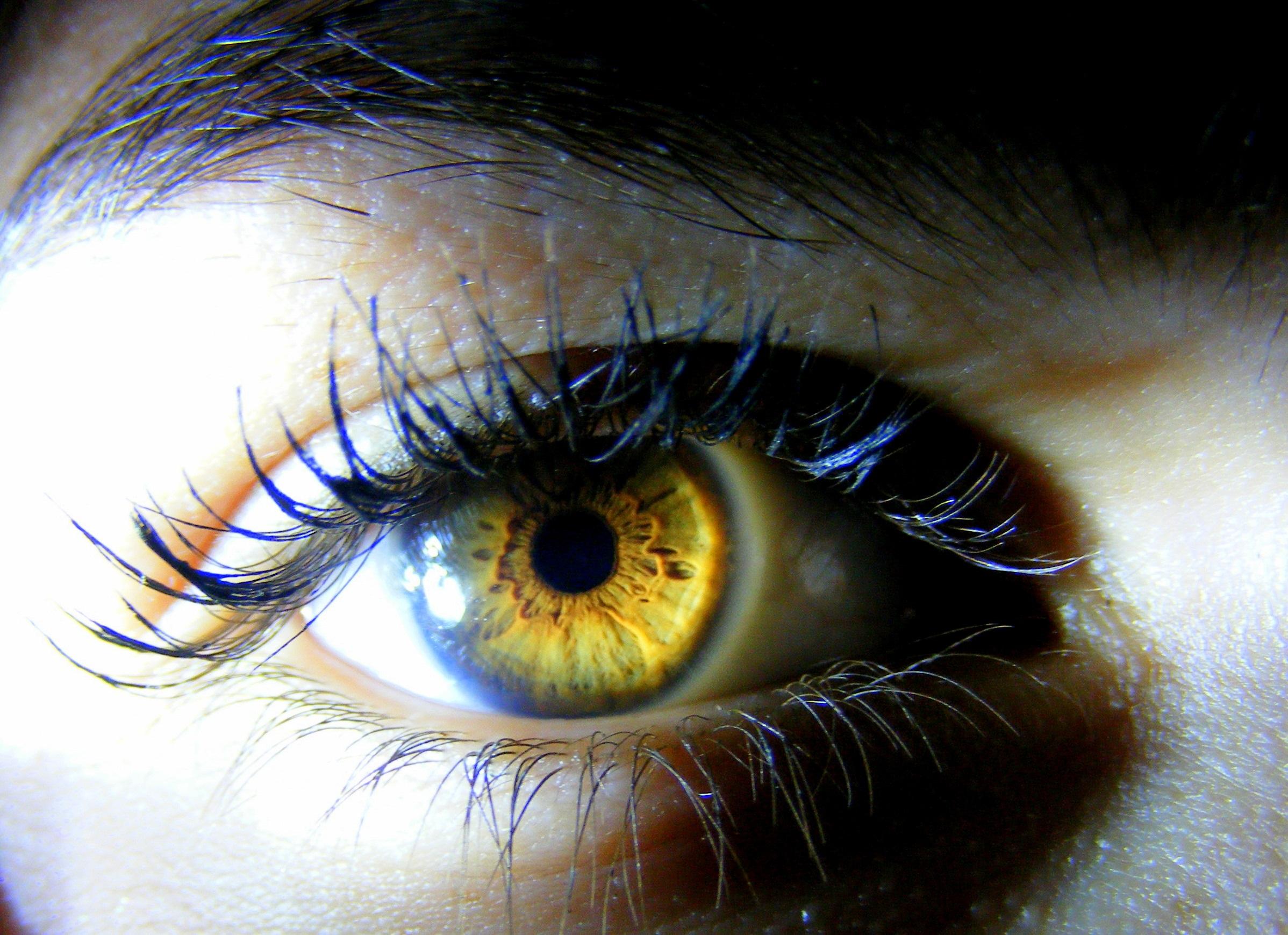 Free photo: Human Eye - Eye, Focus, Human - Free Download ...