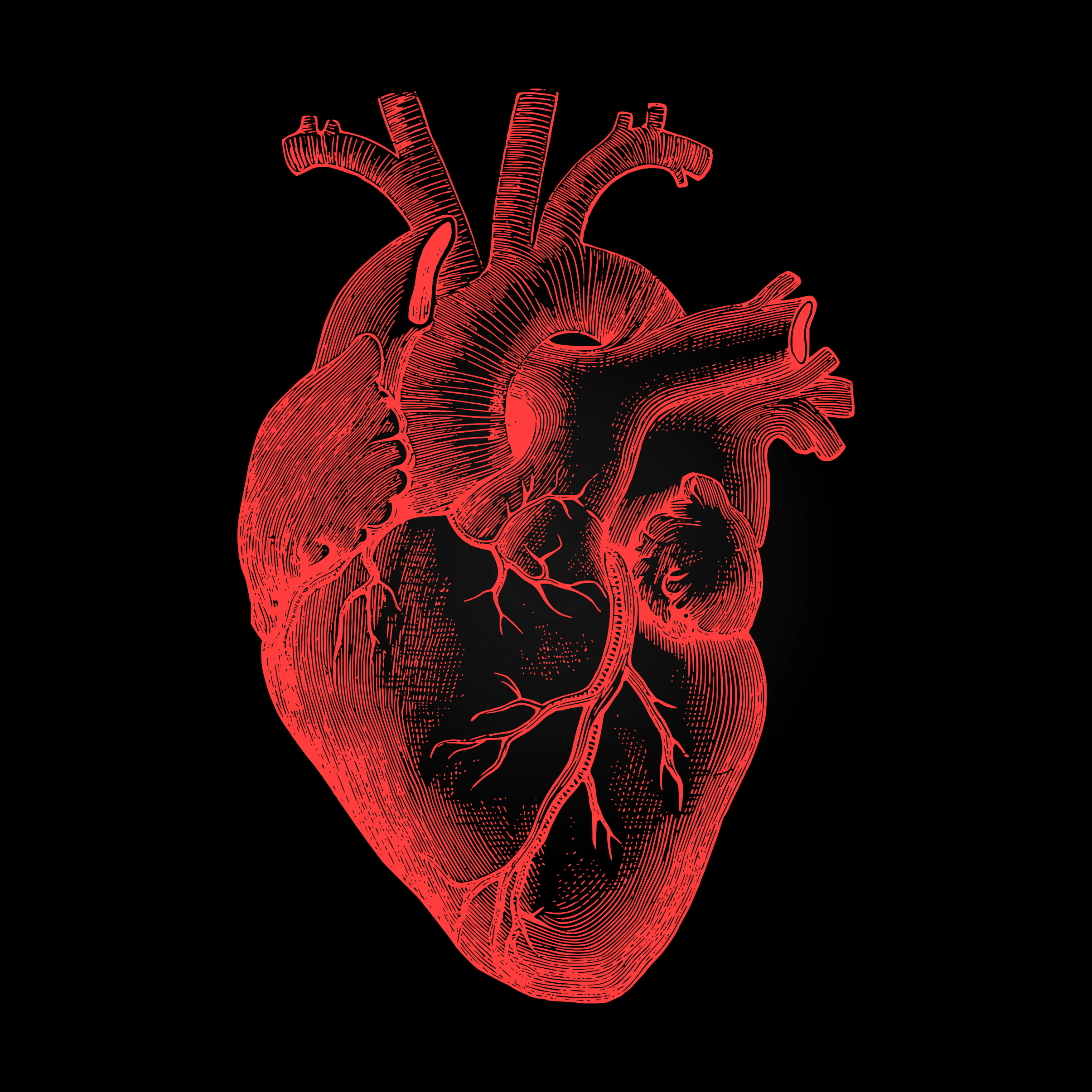 Human heart - anatomical rendering on dark background photo