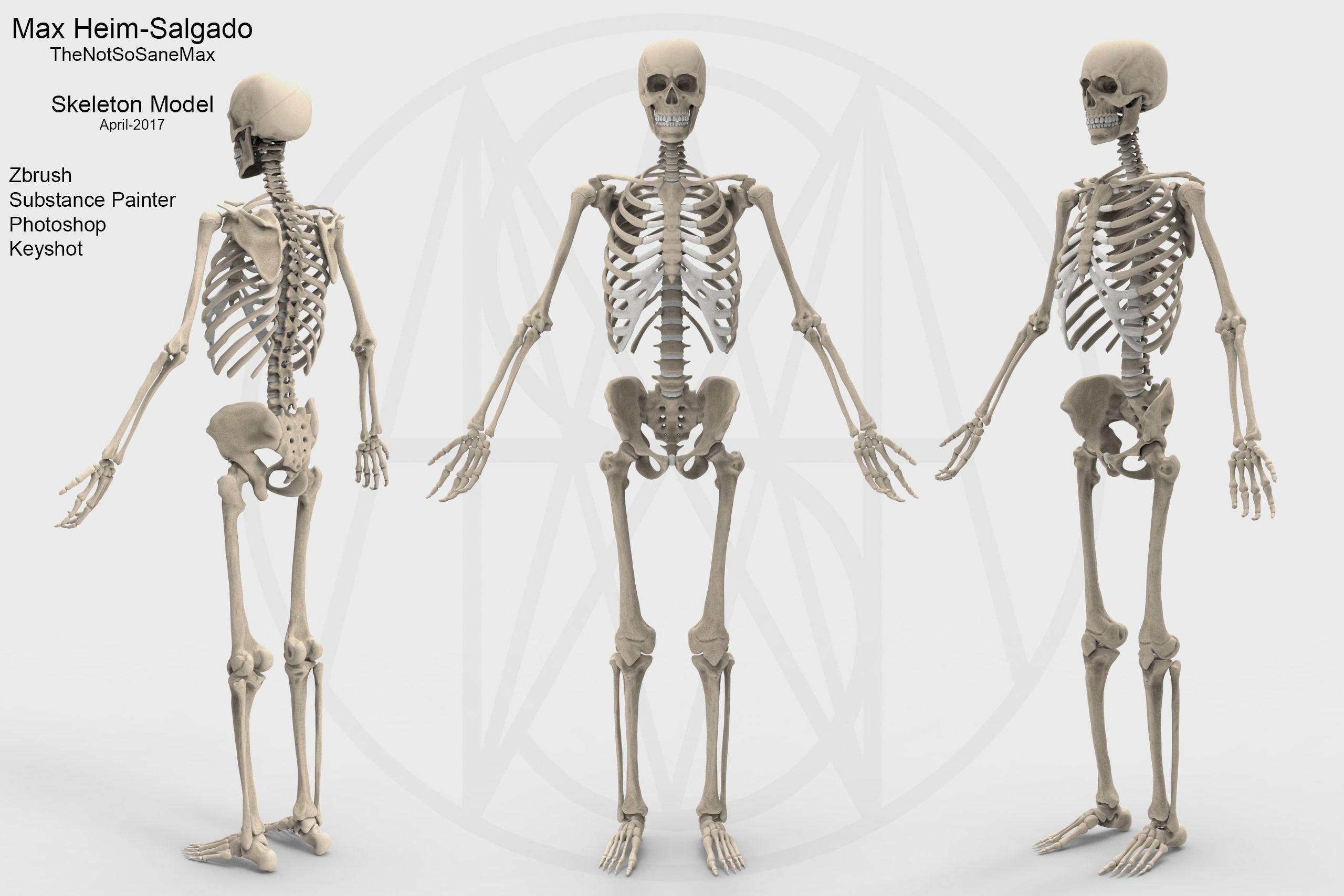 Tolle Zbrush Menschliche Anatomie Fotos - Anatomie Ideen - finotti.info