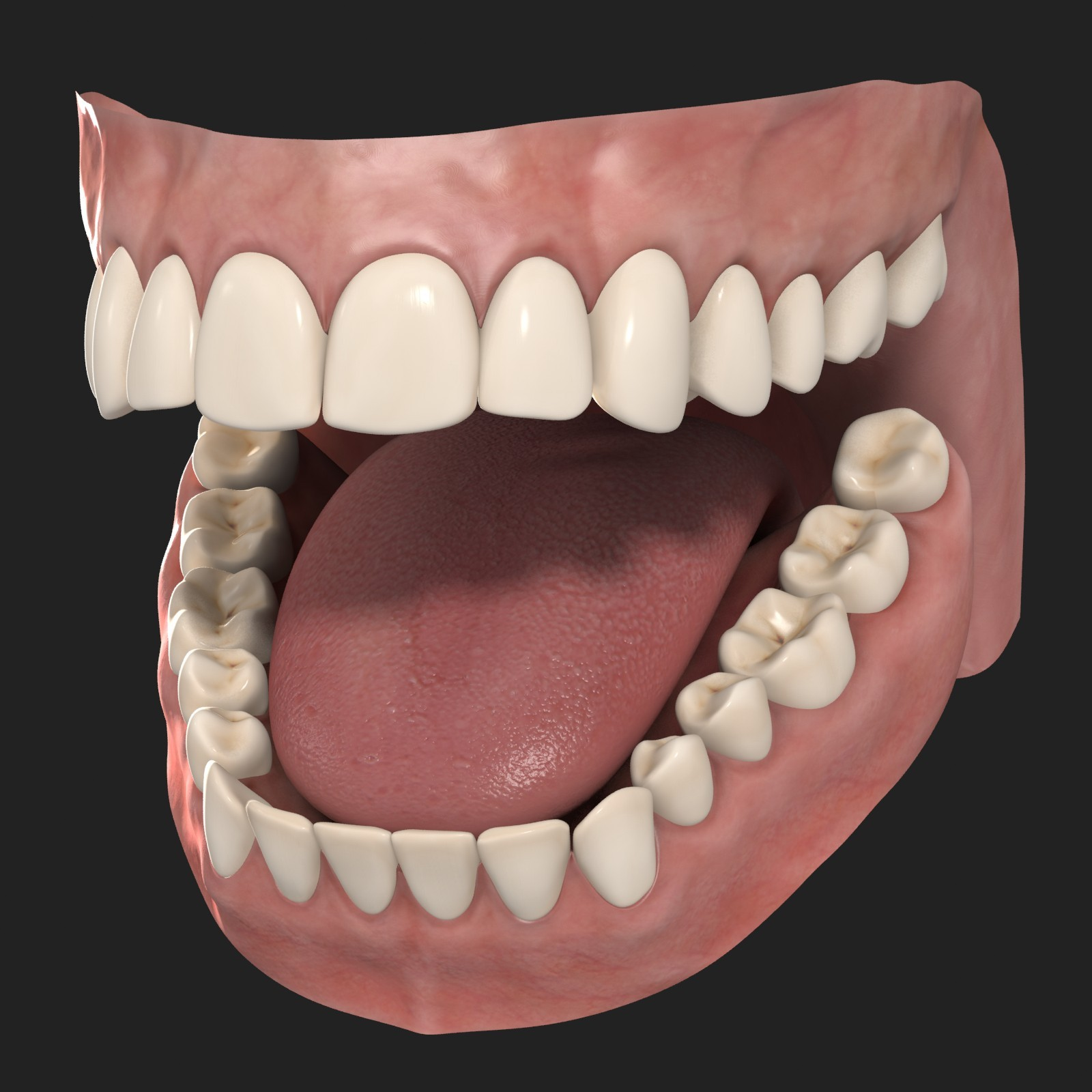 Free Photo  Human Teeth - Adult  Model  Tongue