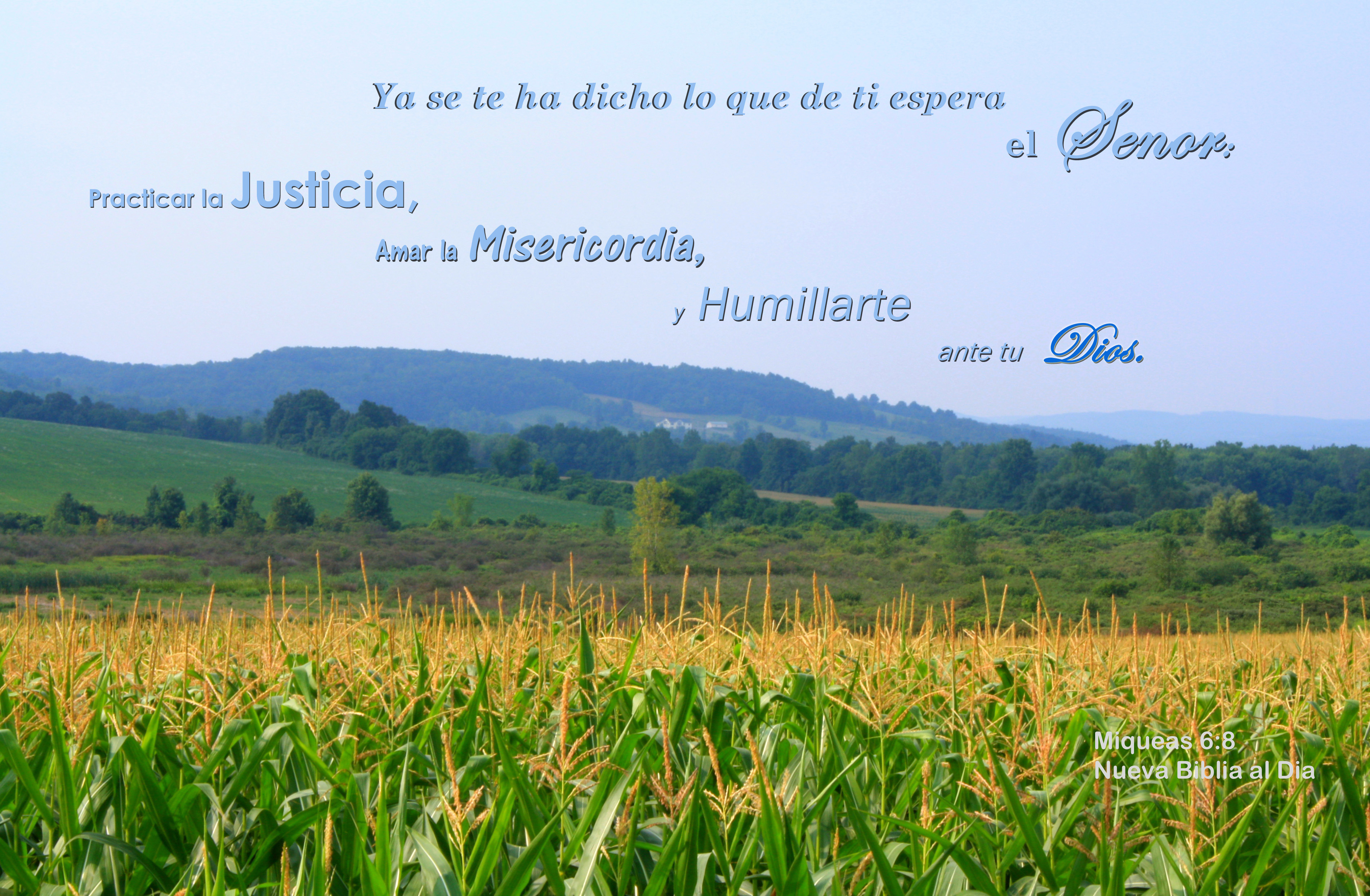 Humillarte Ante tu Dios, Bible, Corn, Cornfield, Fall, HQ Photo