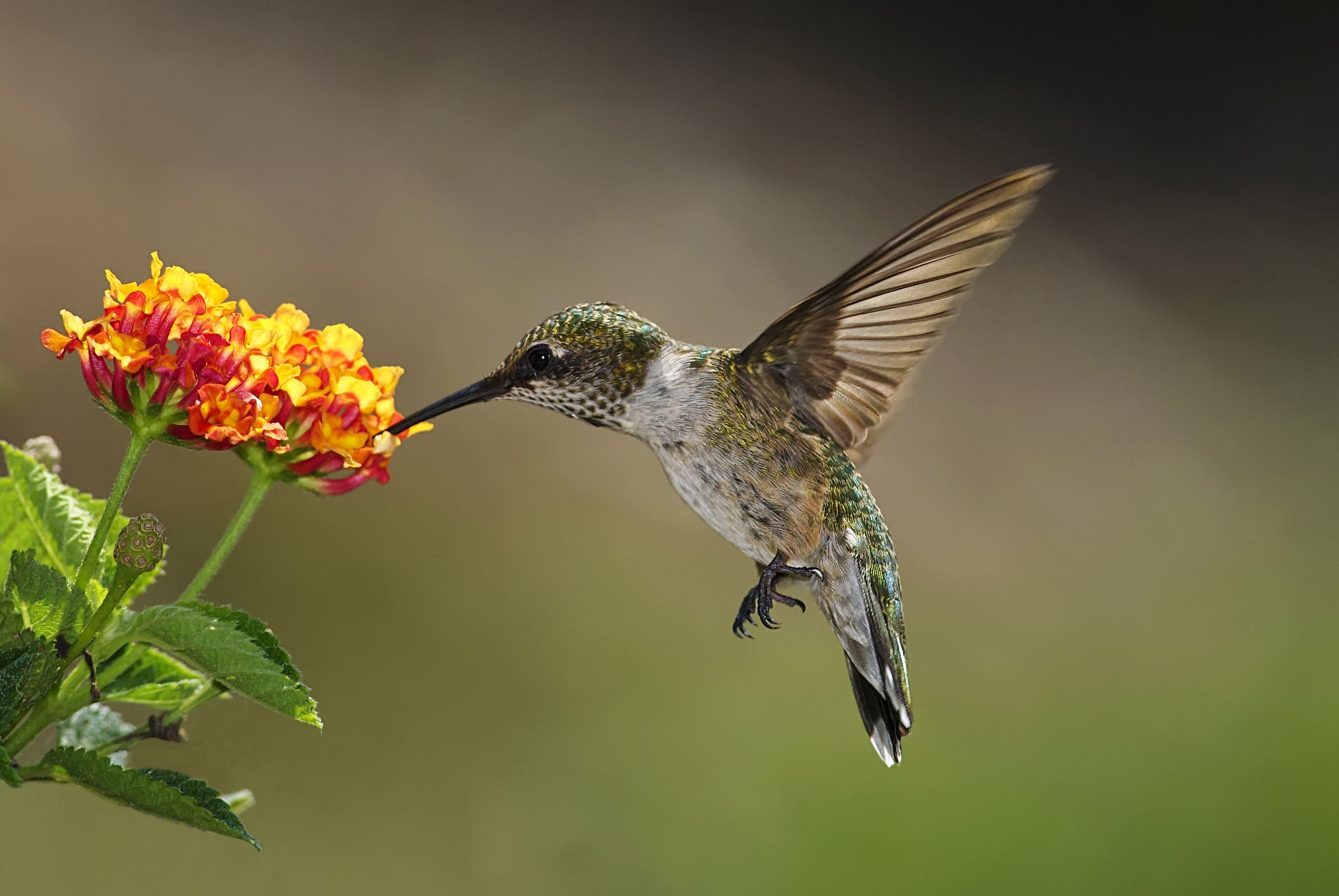 Flowers to Attract Hummingbirds: Best Choices