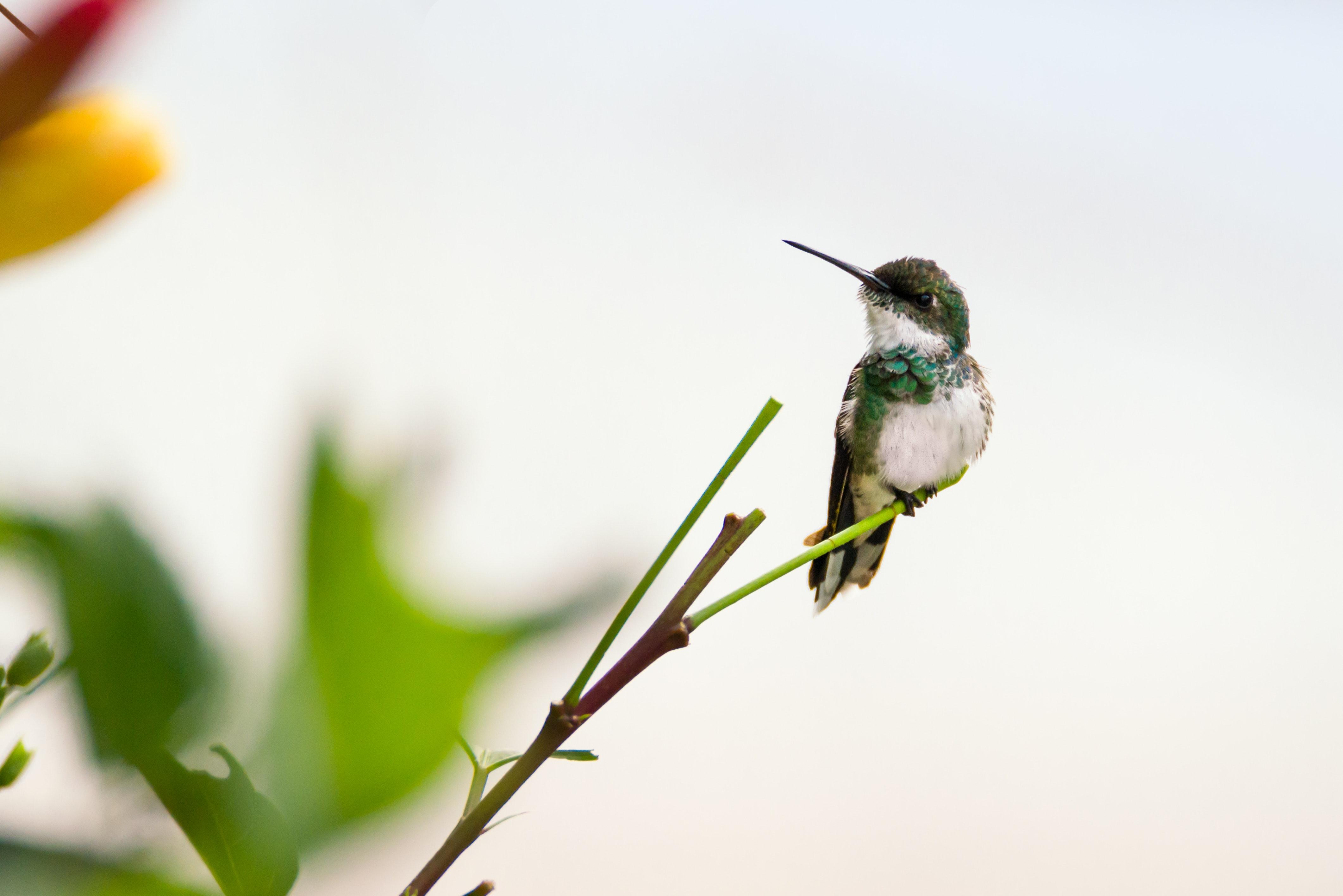 Hummingbird on Plant, Animal, Leaves, Wild, Tiny, HQ Photo