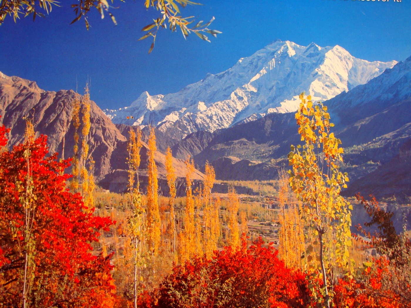 Hunza, Autumn, Flowers, Hills, Ice, HQ Photo