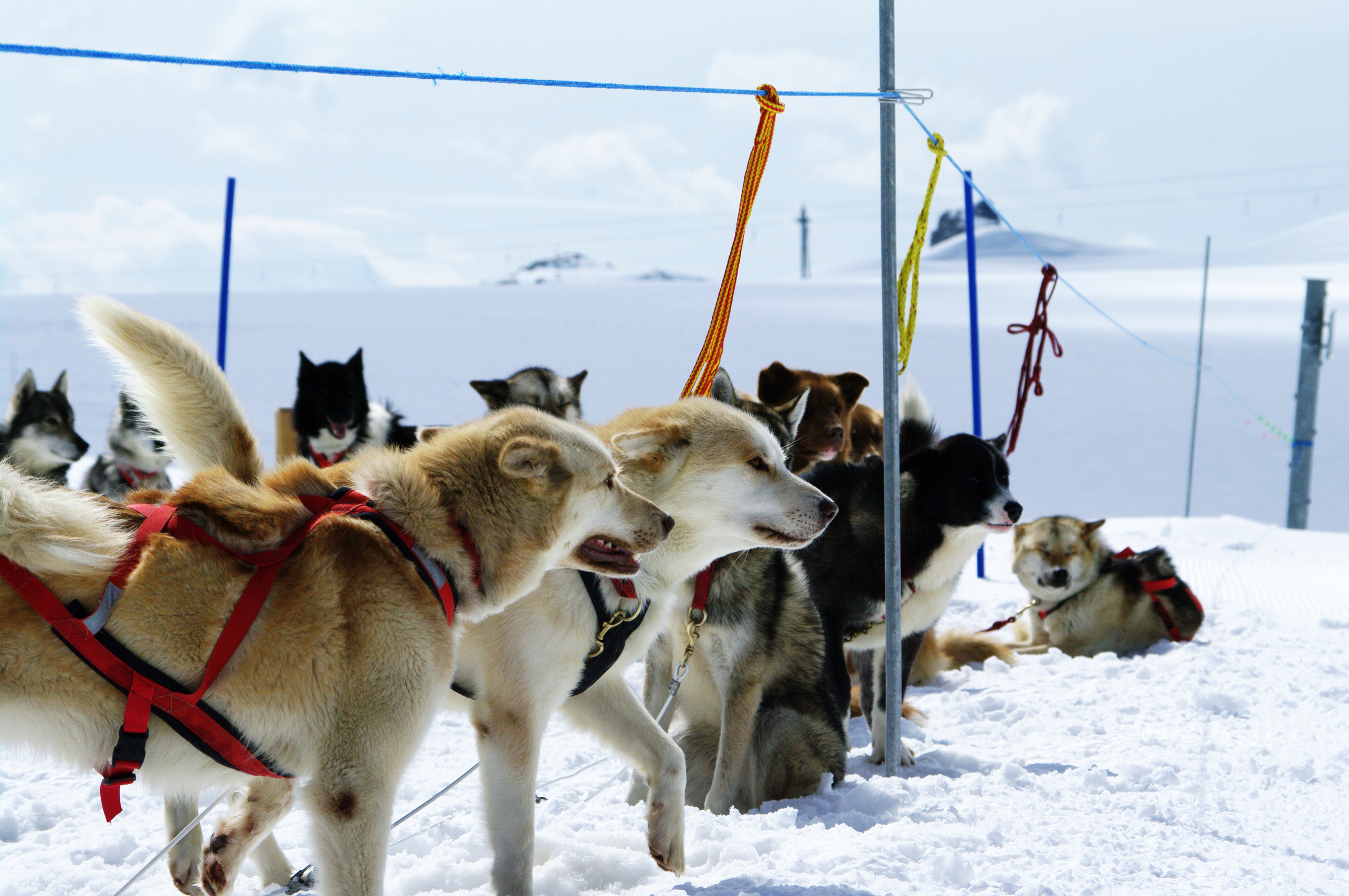 Huskies at mountain, Cold, Dogs, Experience, Freezing, HQ Photo