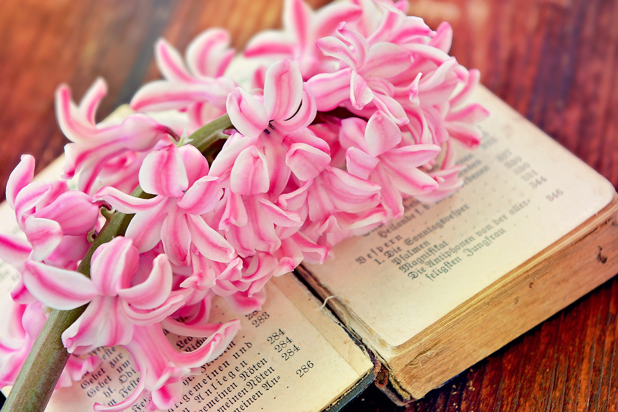 Hyacinth, Bloom, Blooming, Book, Flower, HQ Photo