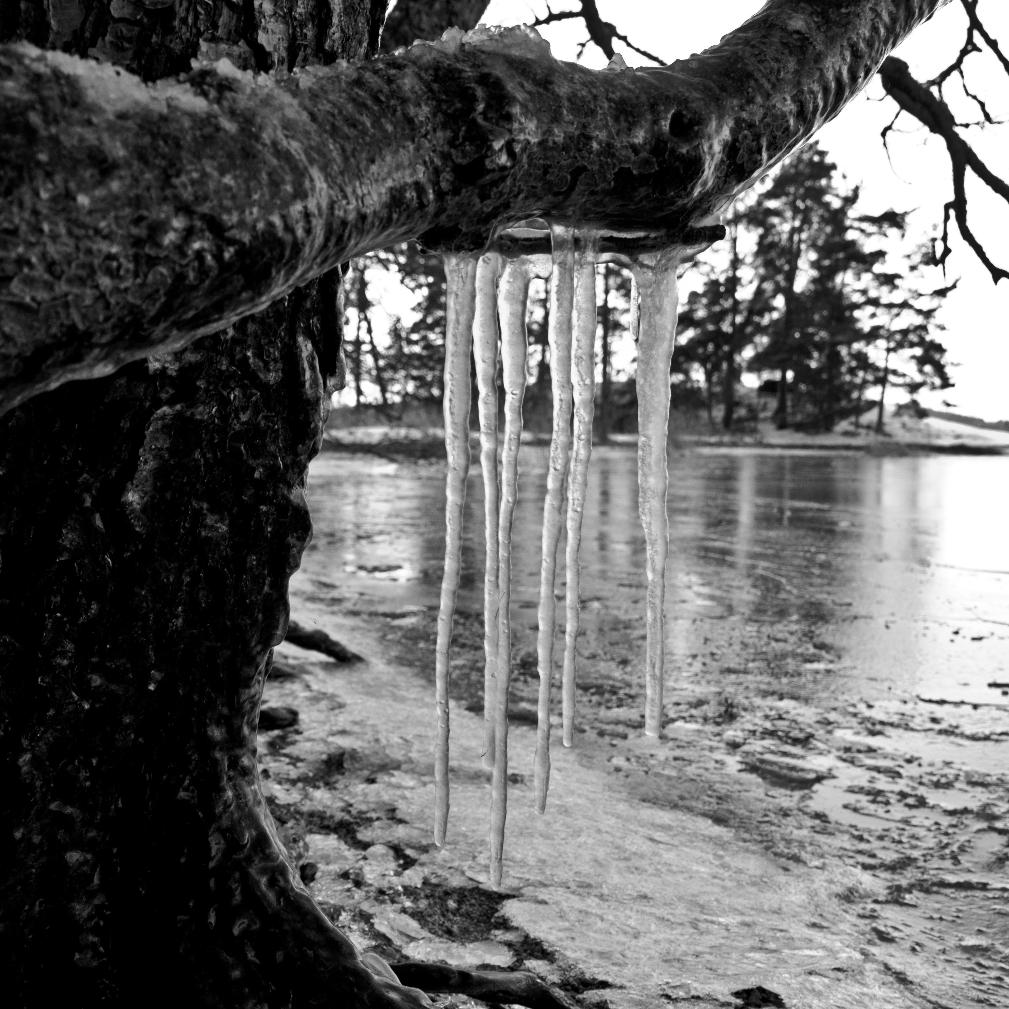 Ice and wood photo