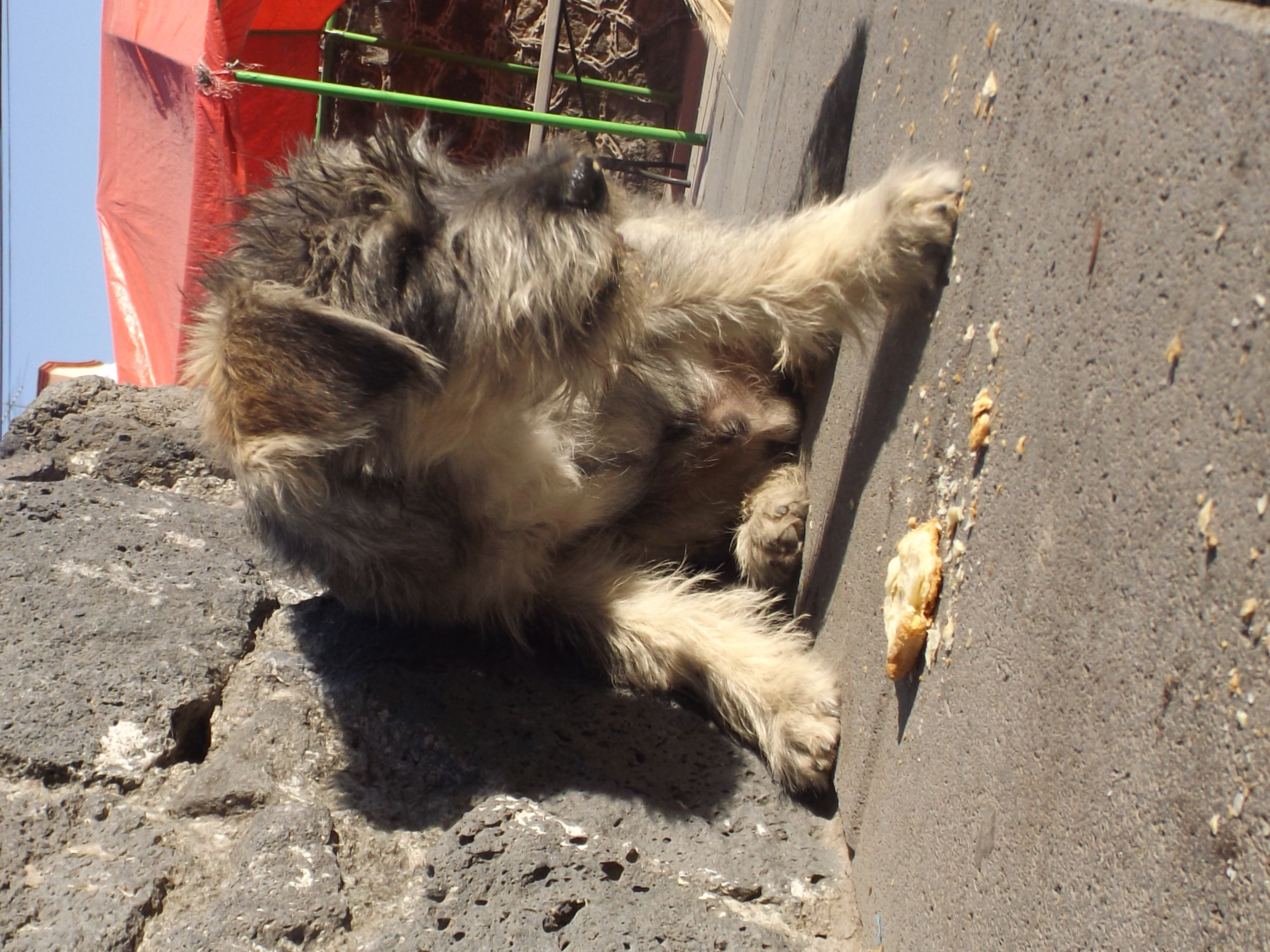 Iglesia de Visitación, Animal, Cat, Outdoor, Pet, HQ Photo