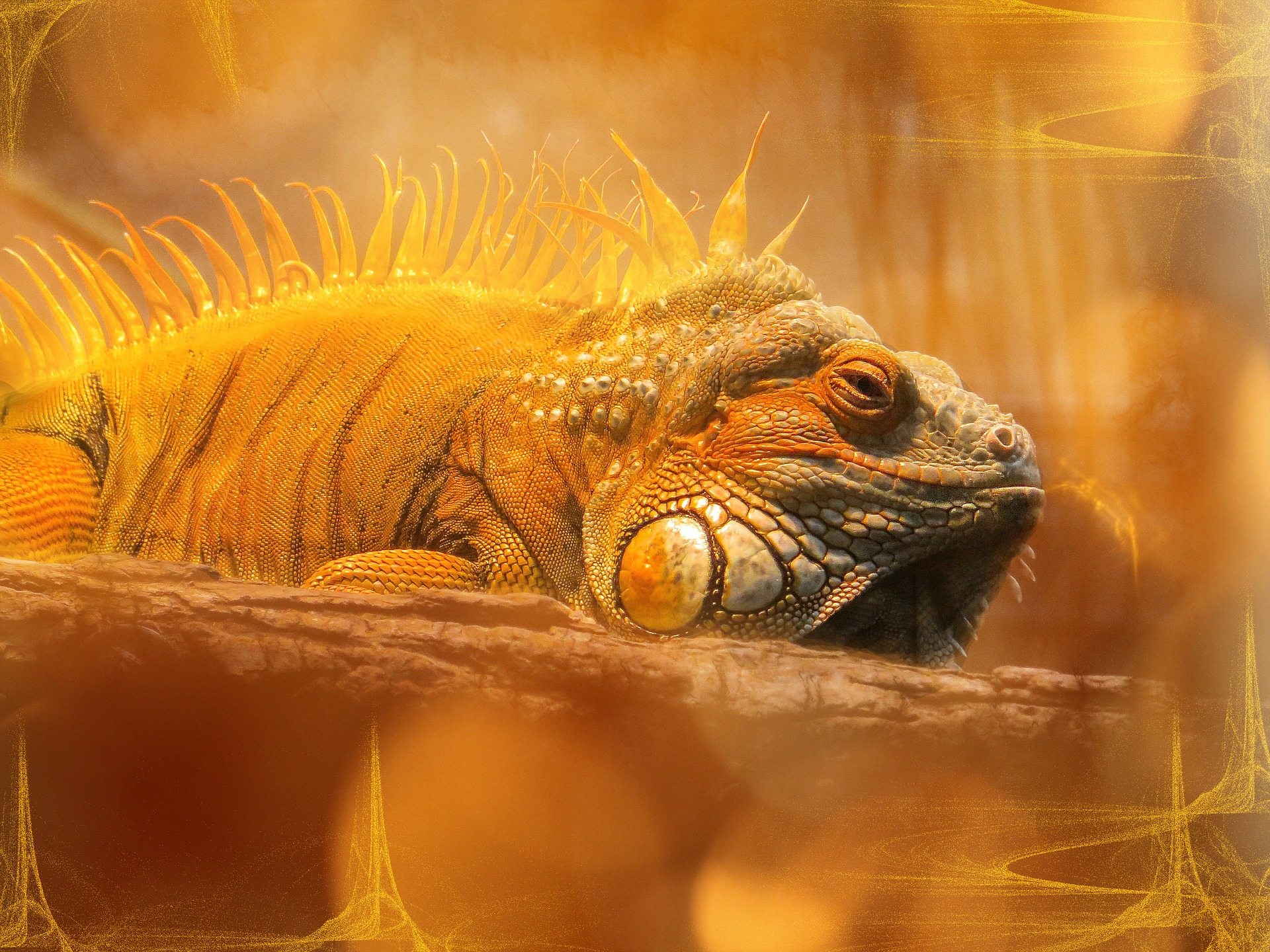 Iguana, Animal, Edit, Lizard, Nature, HQ Photo
