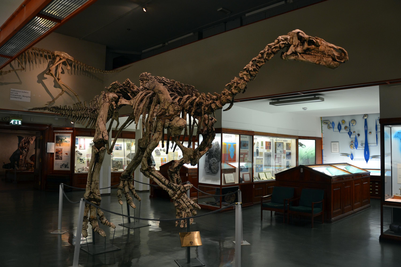 Iguanodon bernissartensis photo